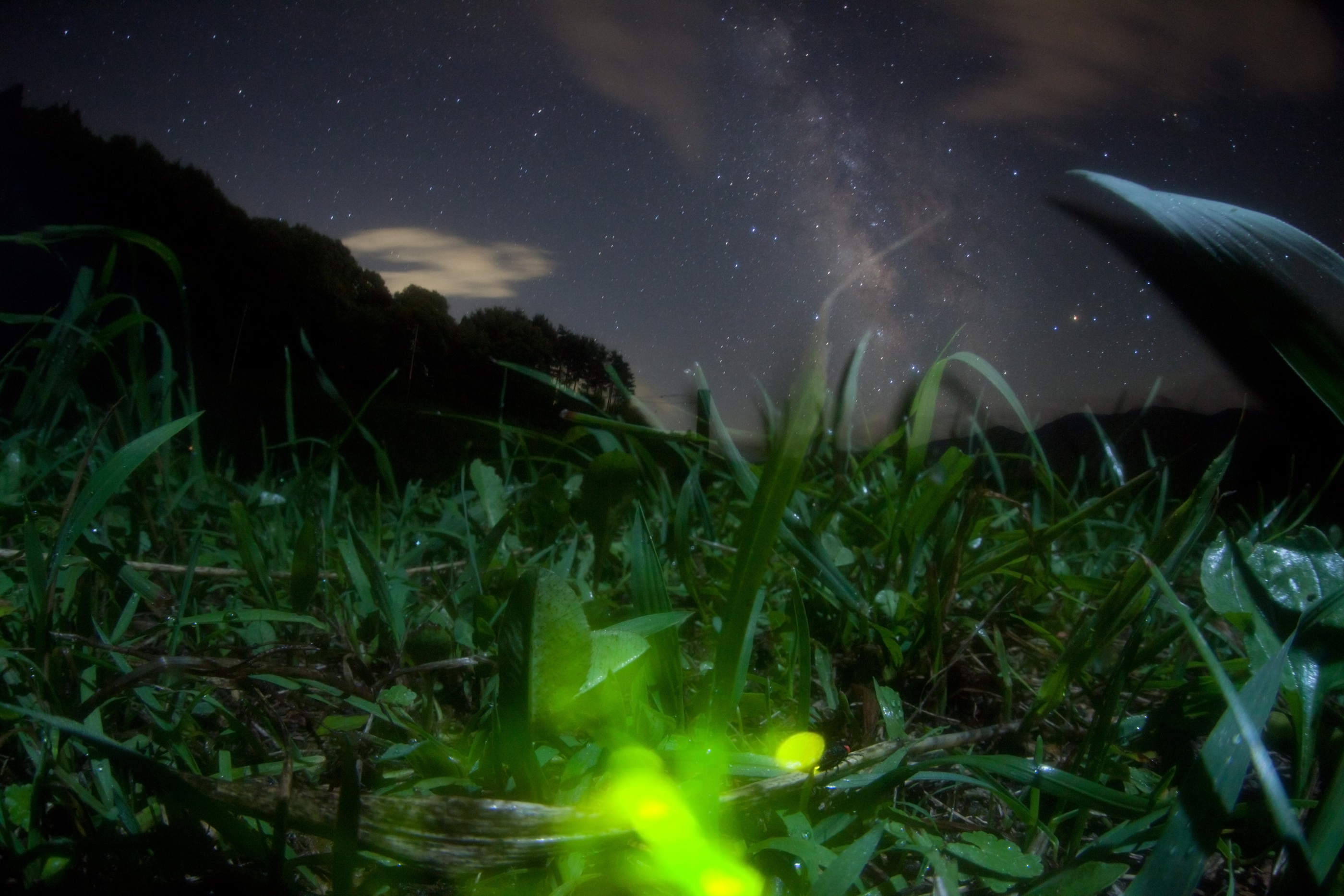 fireflygalaxy found This firefly HD Wallpaper