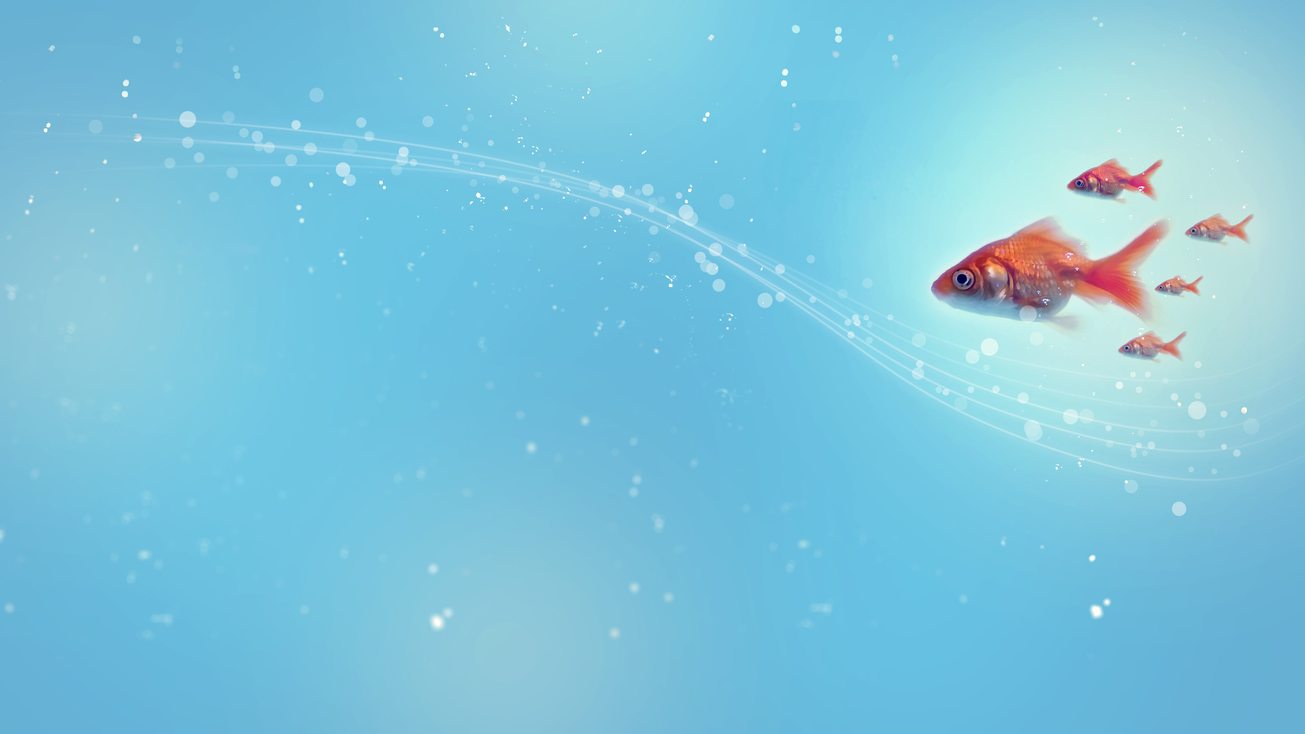 fish HD Wallpaper