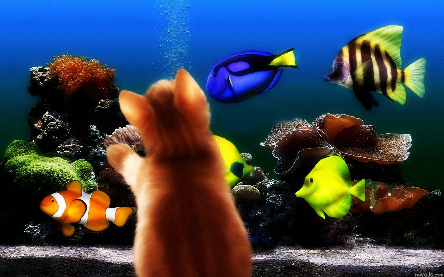fish aquarium Kittens HD Wallpaper