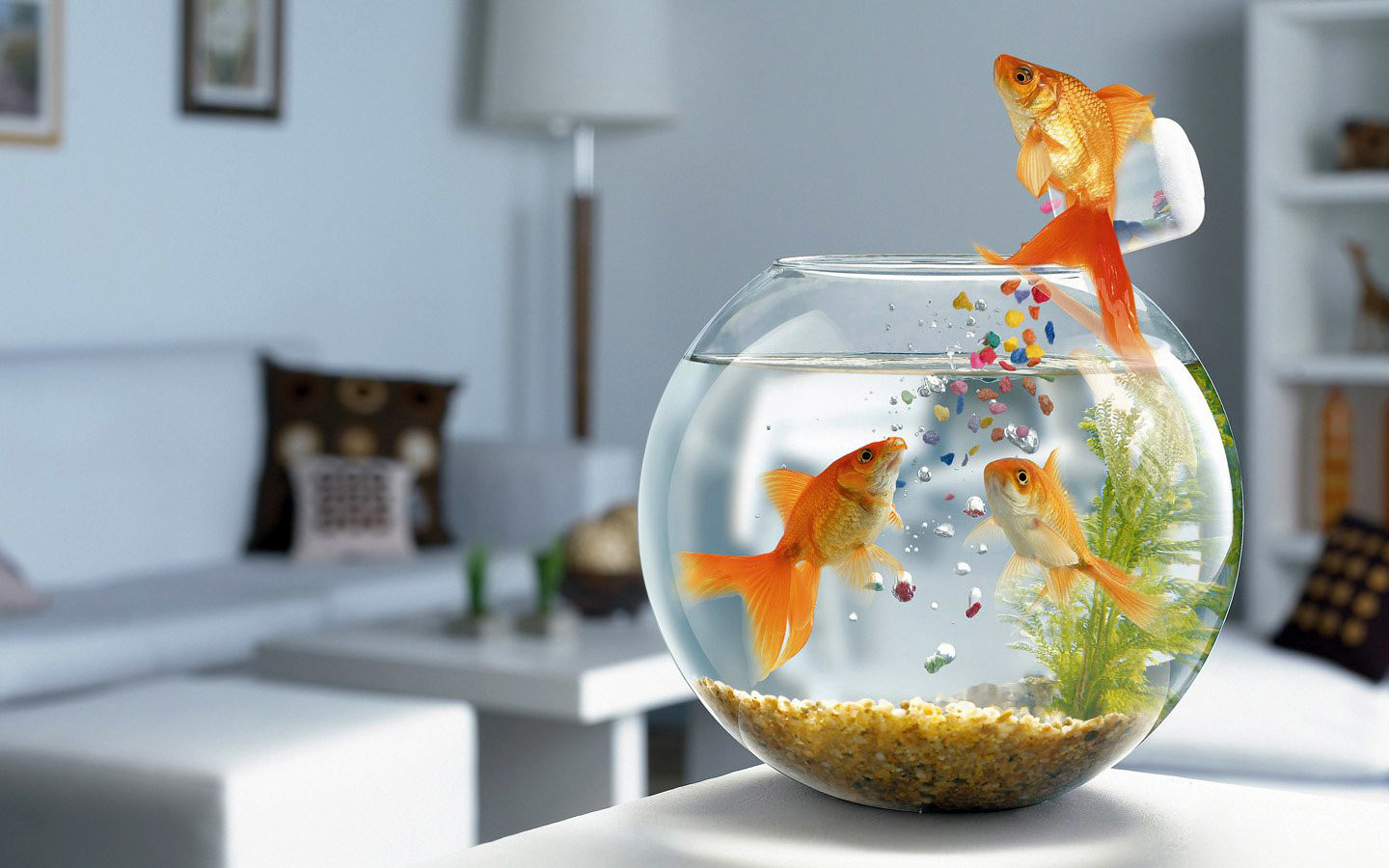 fish pets bowls Aquarium HD Wallpaper