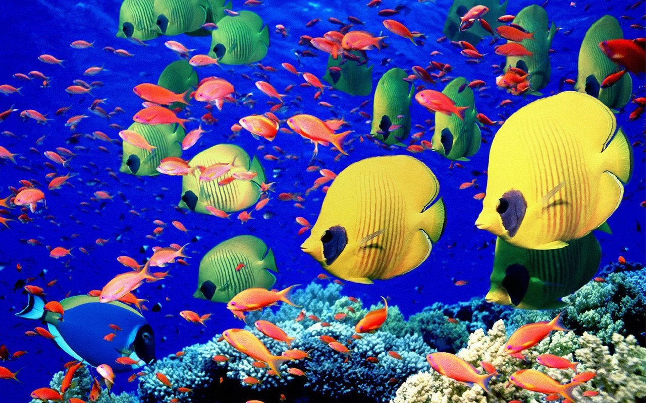 fish underwater Sea HD Wallpaper