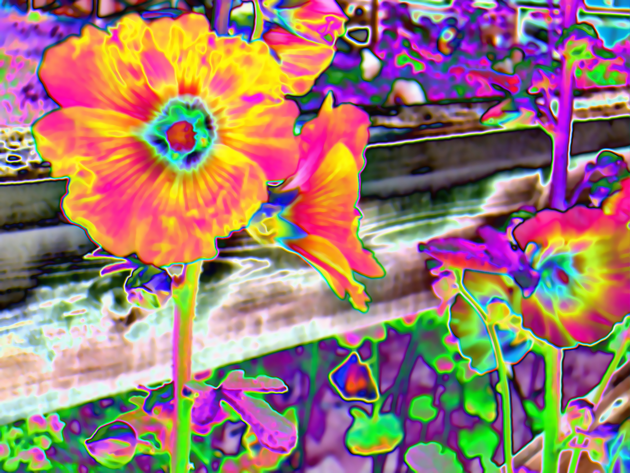 Flowers acid flower HD Wallpaper