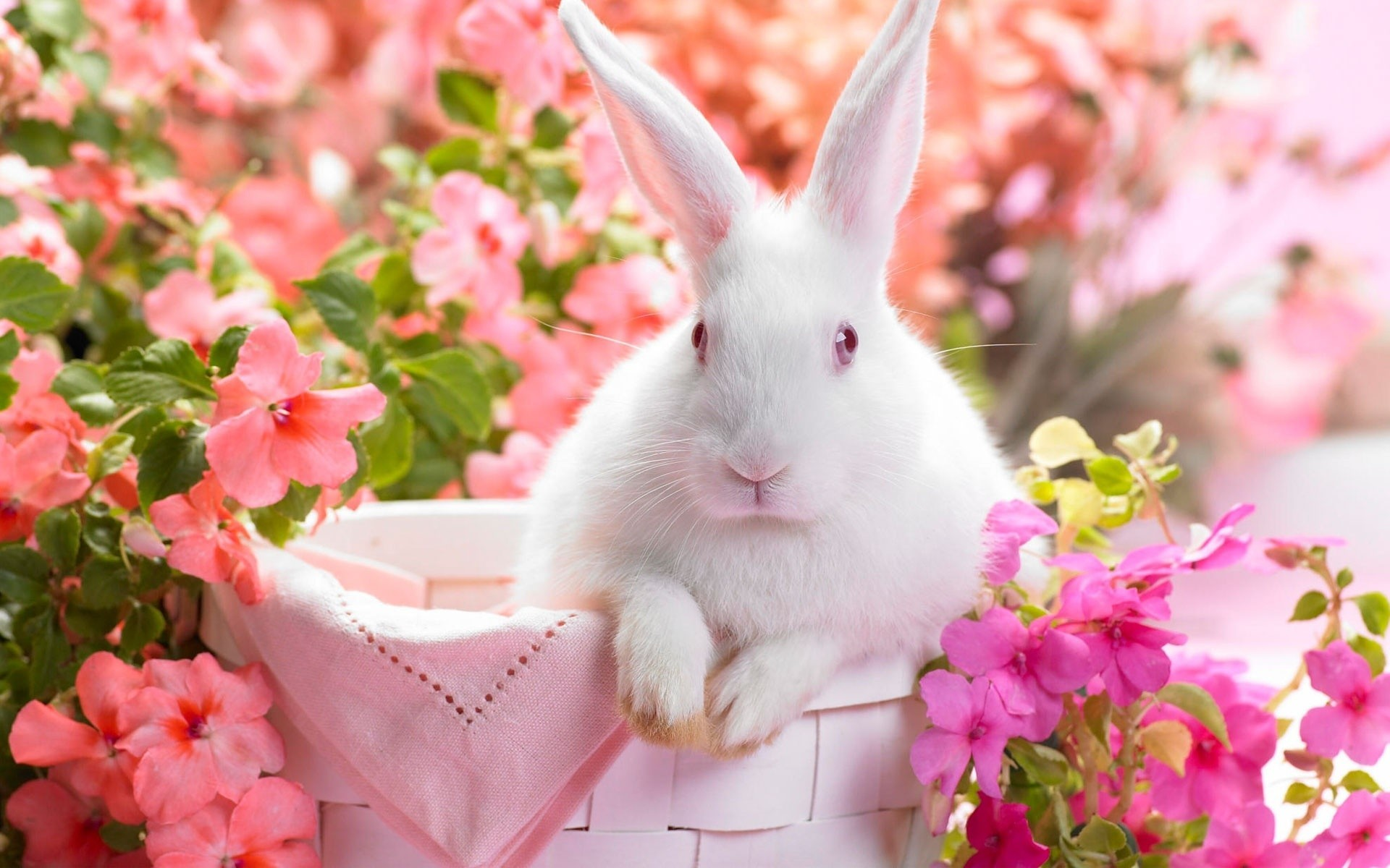 Flowers Animals spring rabbits HD Wallpaper