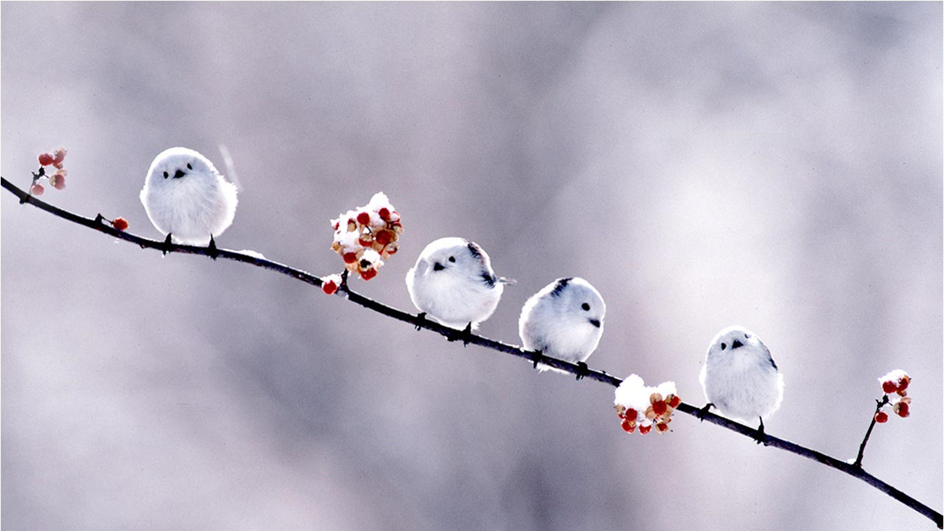 Flowers Birds branches baby HD Wallpaper