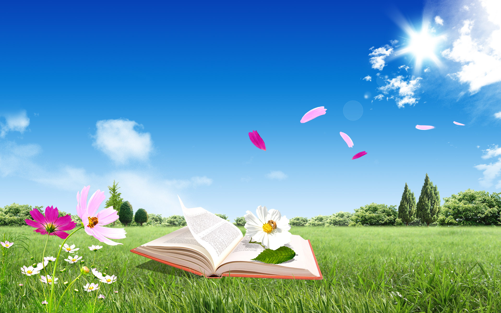 Flowers Books skyscapes HD Wallpaper