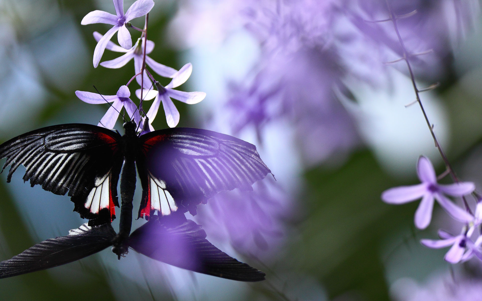 Flowers Butterflies HD Wallpaper