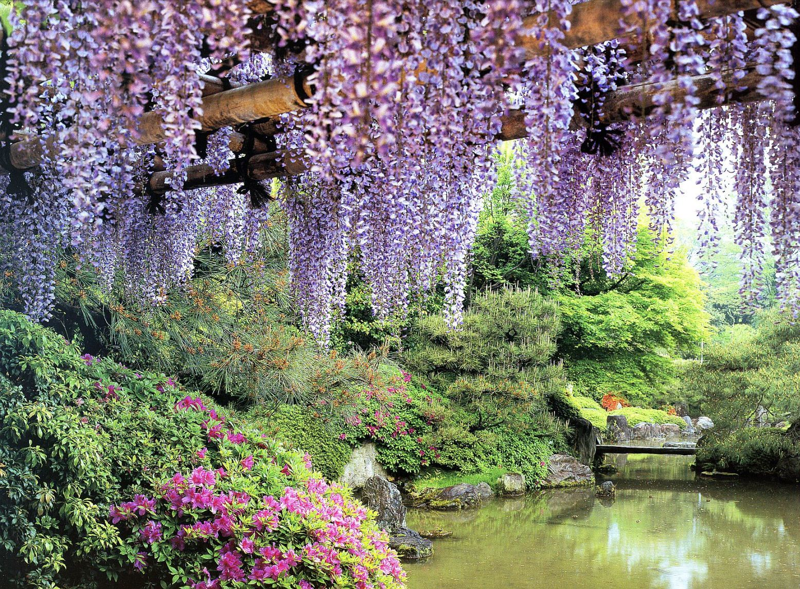 Flowers Garden ponds wisteria HD Wallpaper