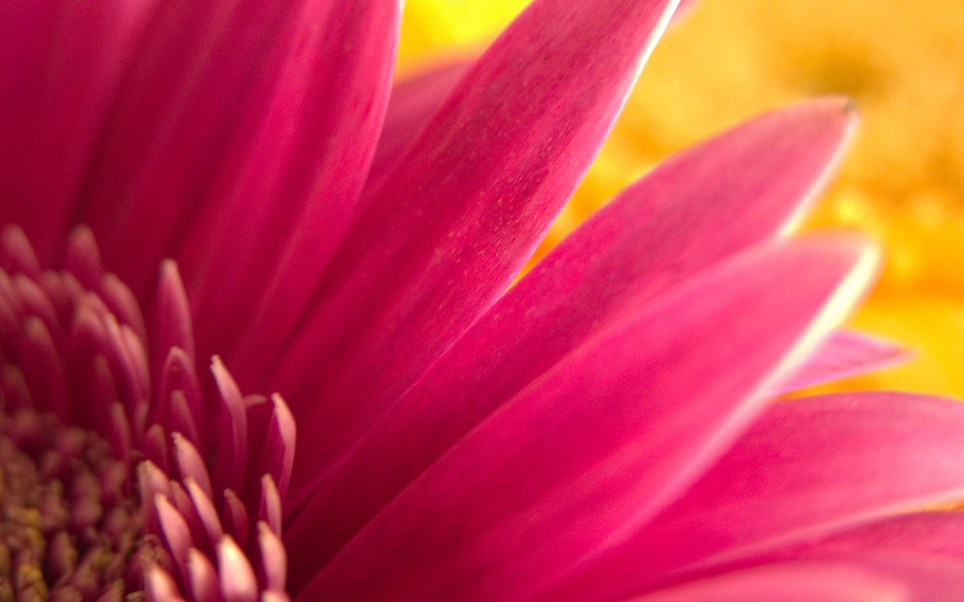 Flowers pink HD Wallpaper