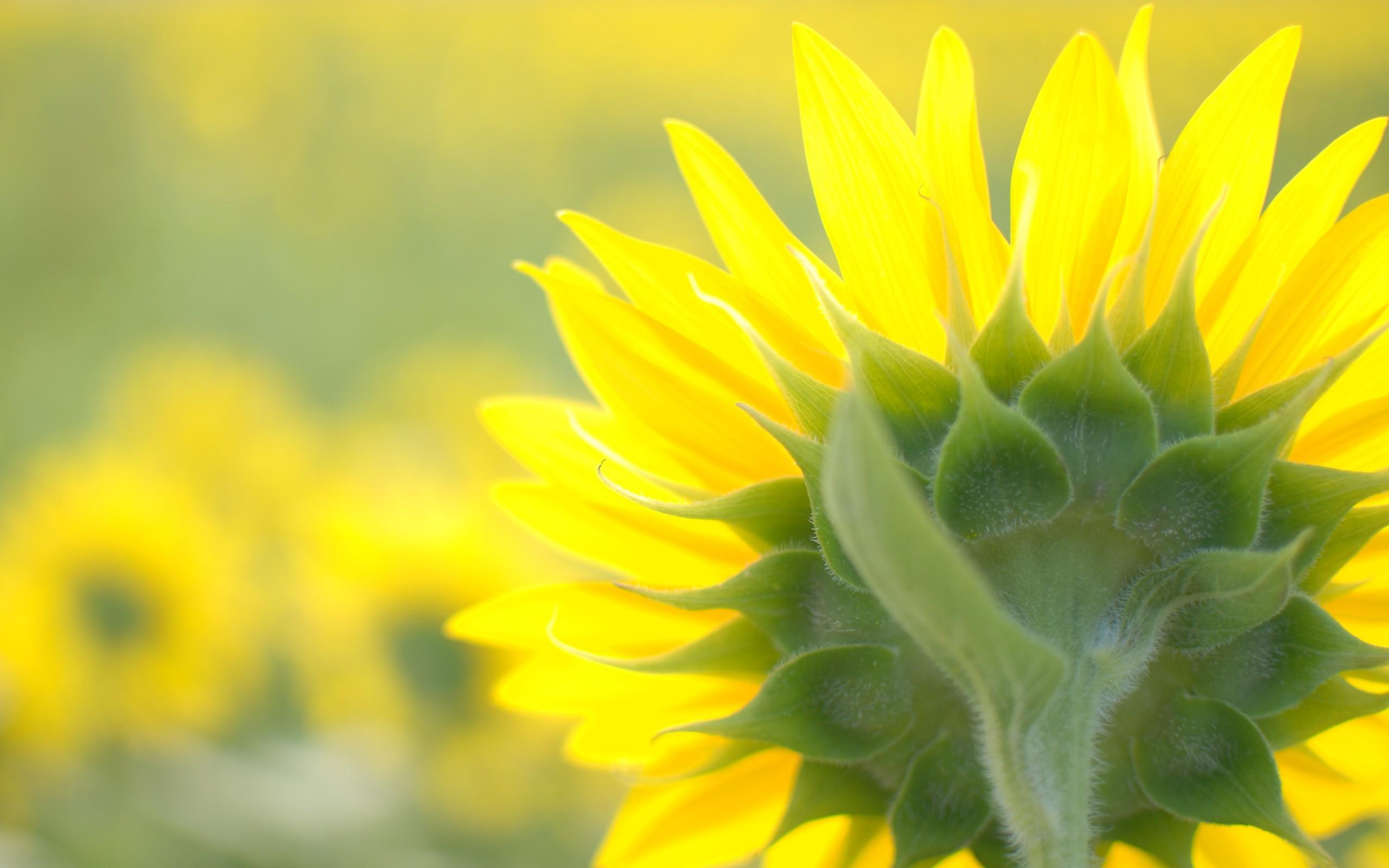 "\""Flowers"
