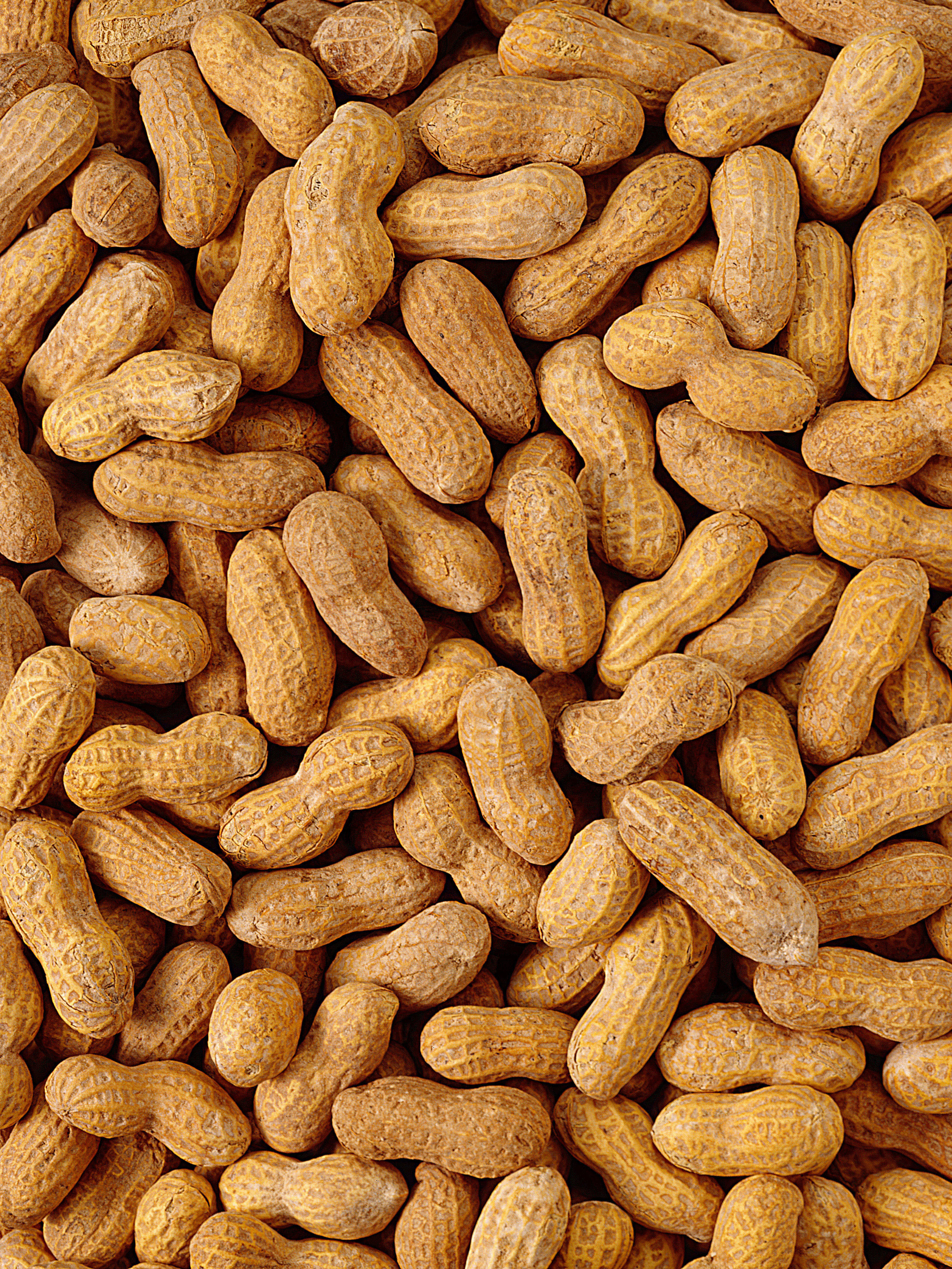 food peanuts nuts Food HD Wallpaper