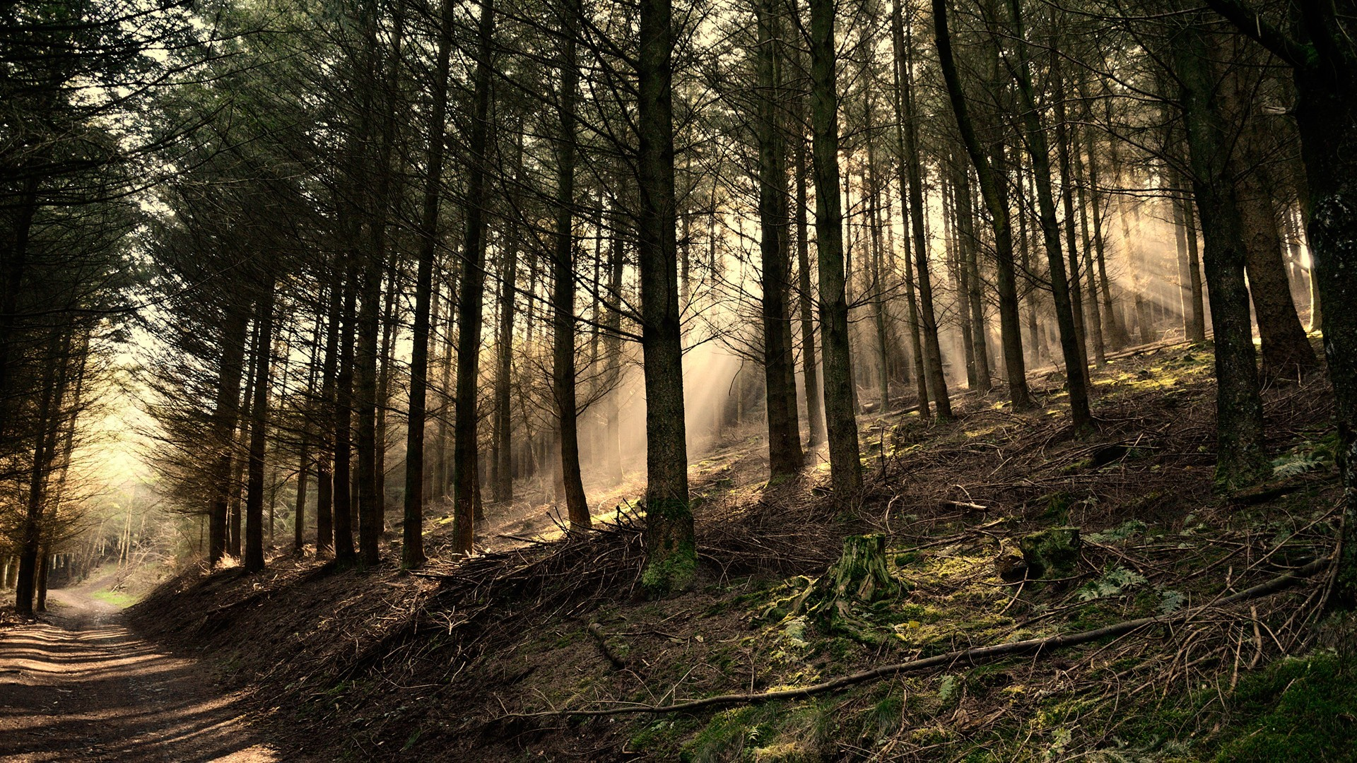 Forestry artistic natural scenery HD Wallpaper