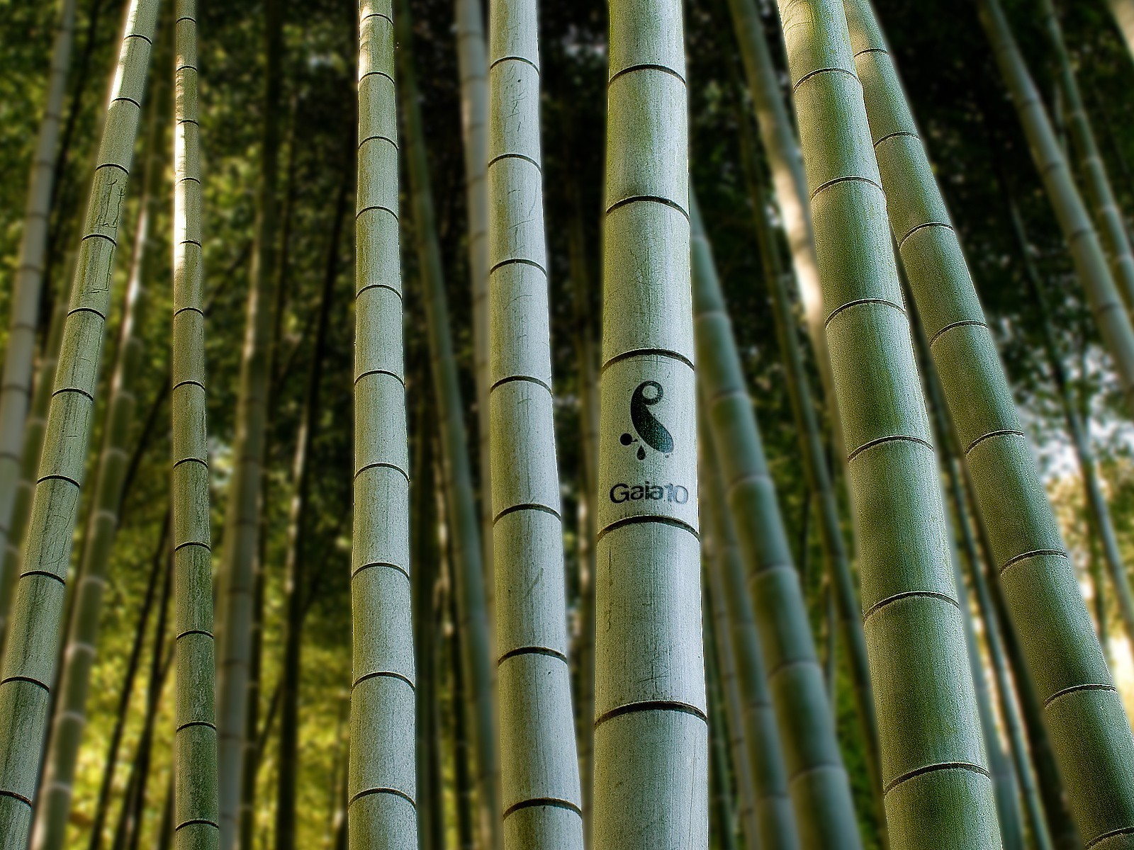 forests bamboo depth of HD Wallpaper