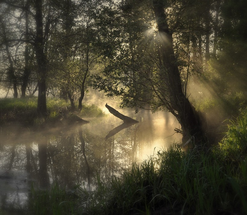 forests fog swamp rivers HD Wallpaper