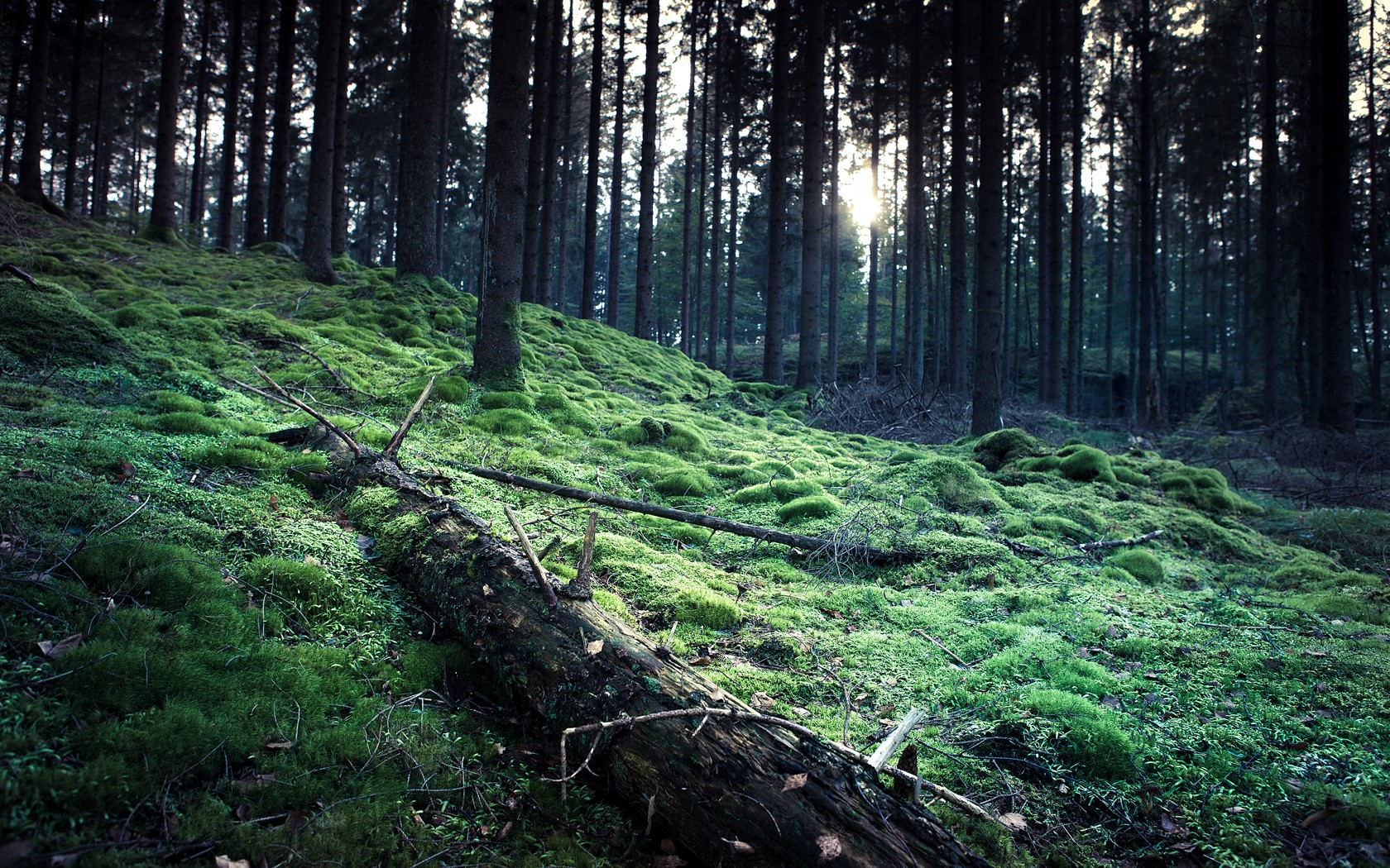 forests grass HD Wallpaper