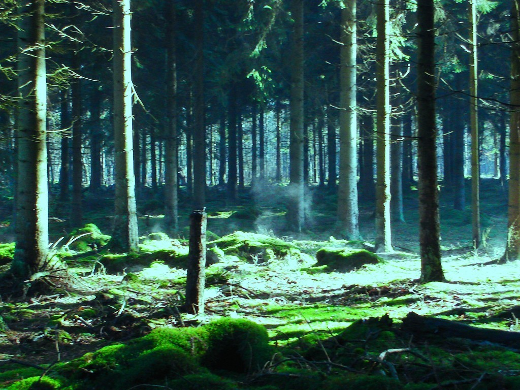forests Great forest HD Wallpaper