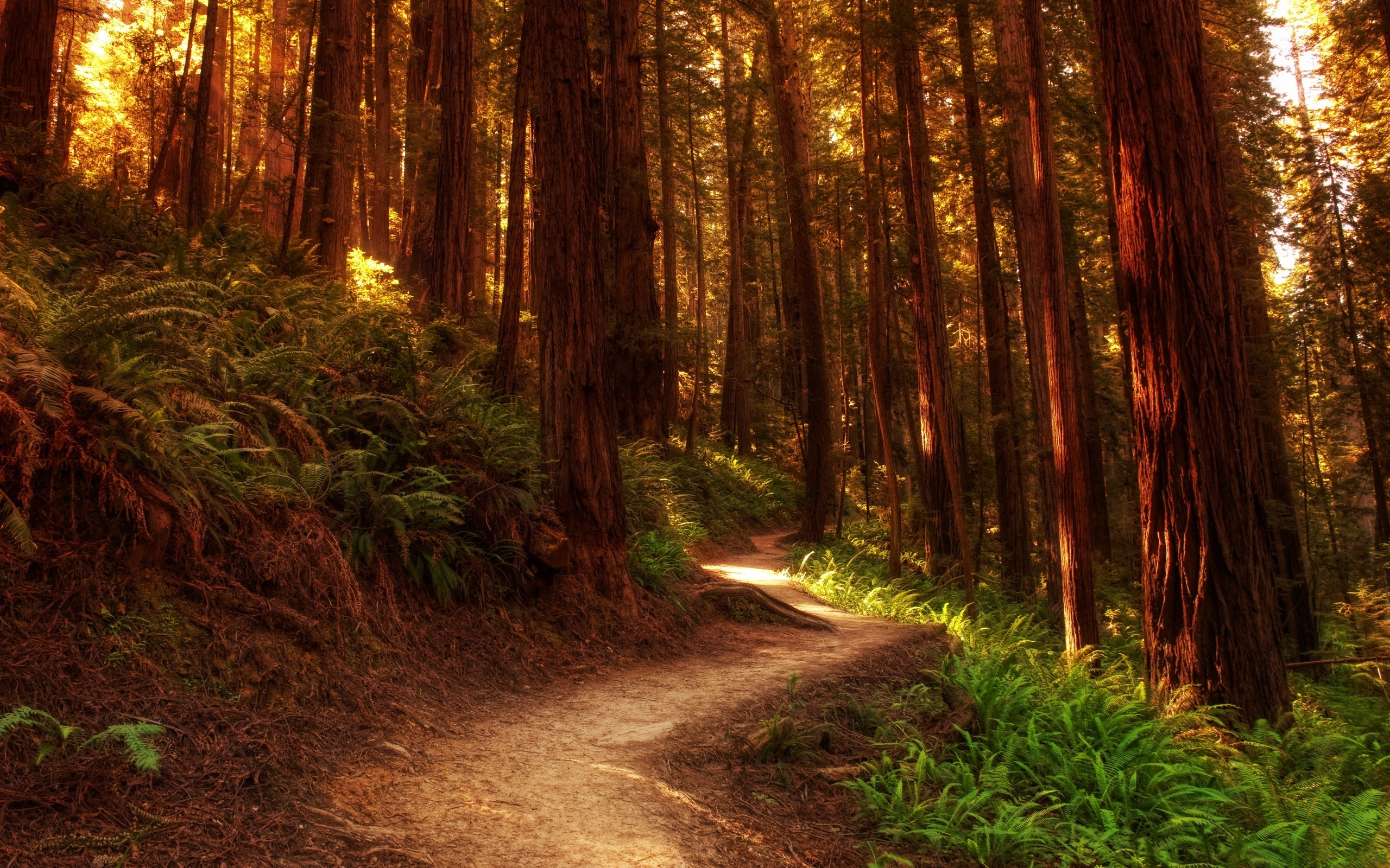 forests paths woods HD Wallpaper