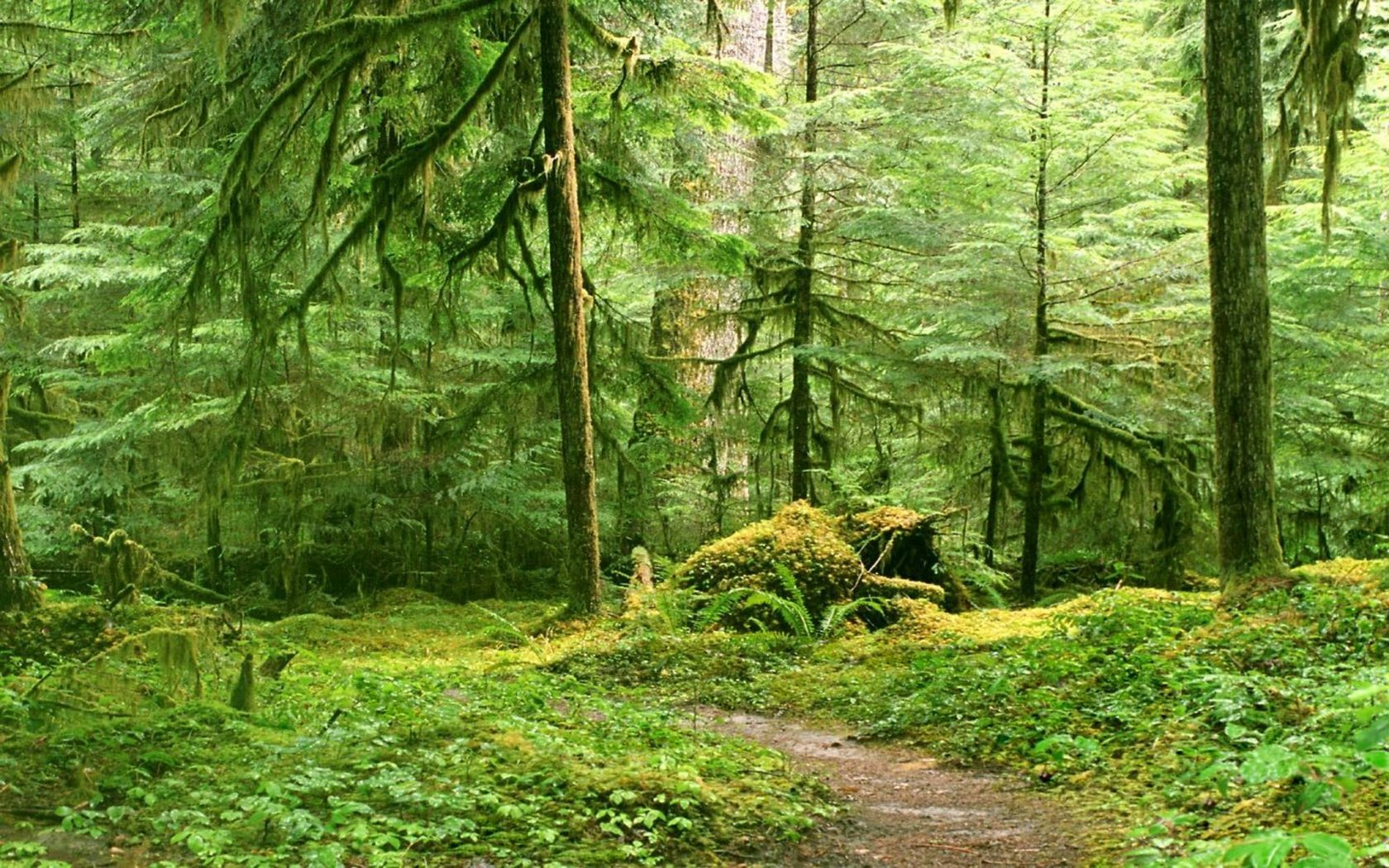 forests trail moss HD Wallpaper