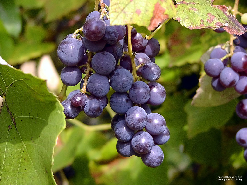 fruits grapes HD Wallpaper