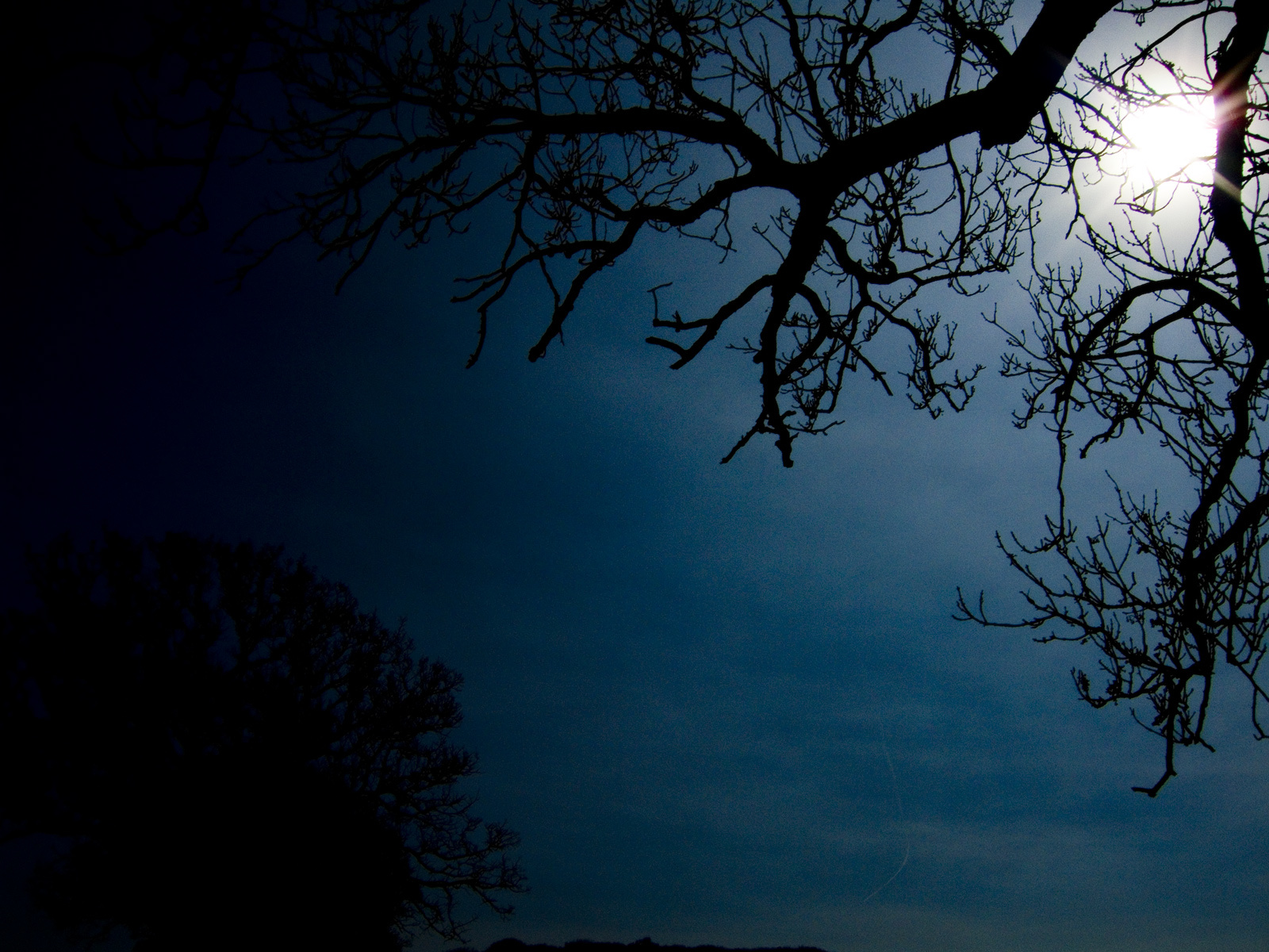 generic tree silhouette by HD Wallpaper
