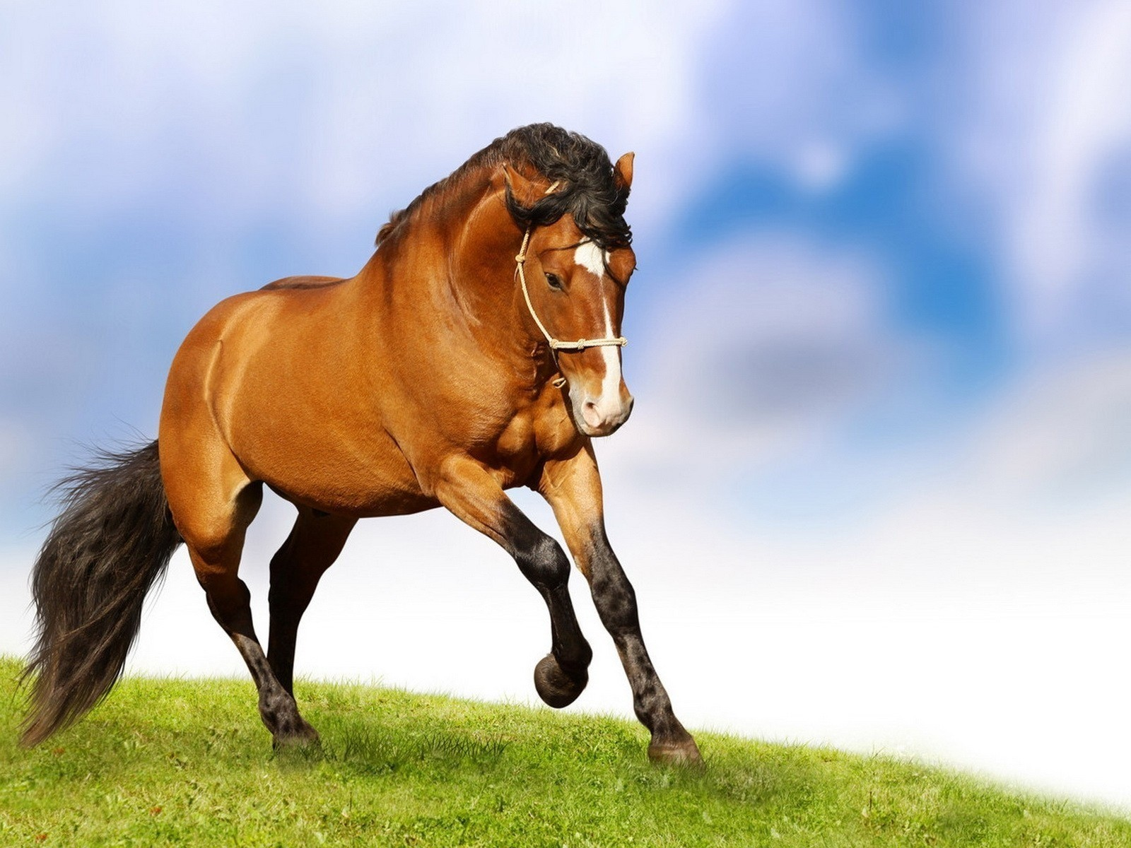 grass Horses running HD Wallpaper