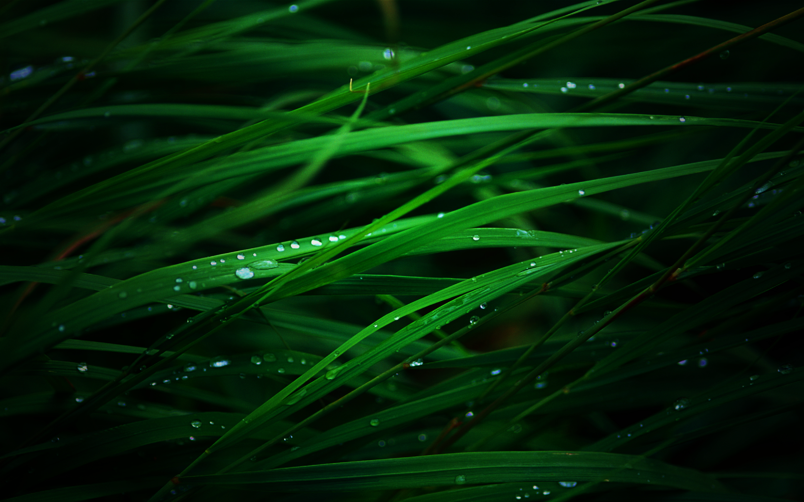 grass water drops ot HD Wallpaper