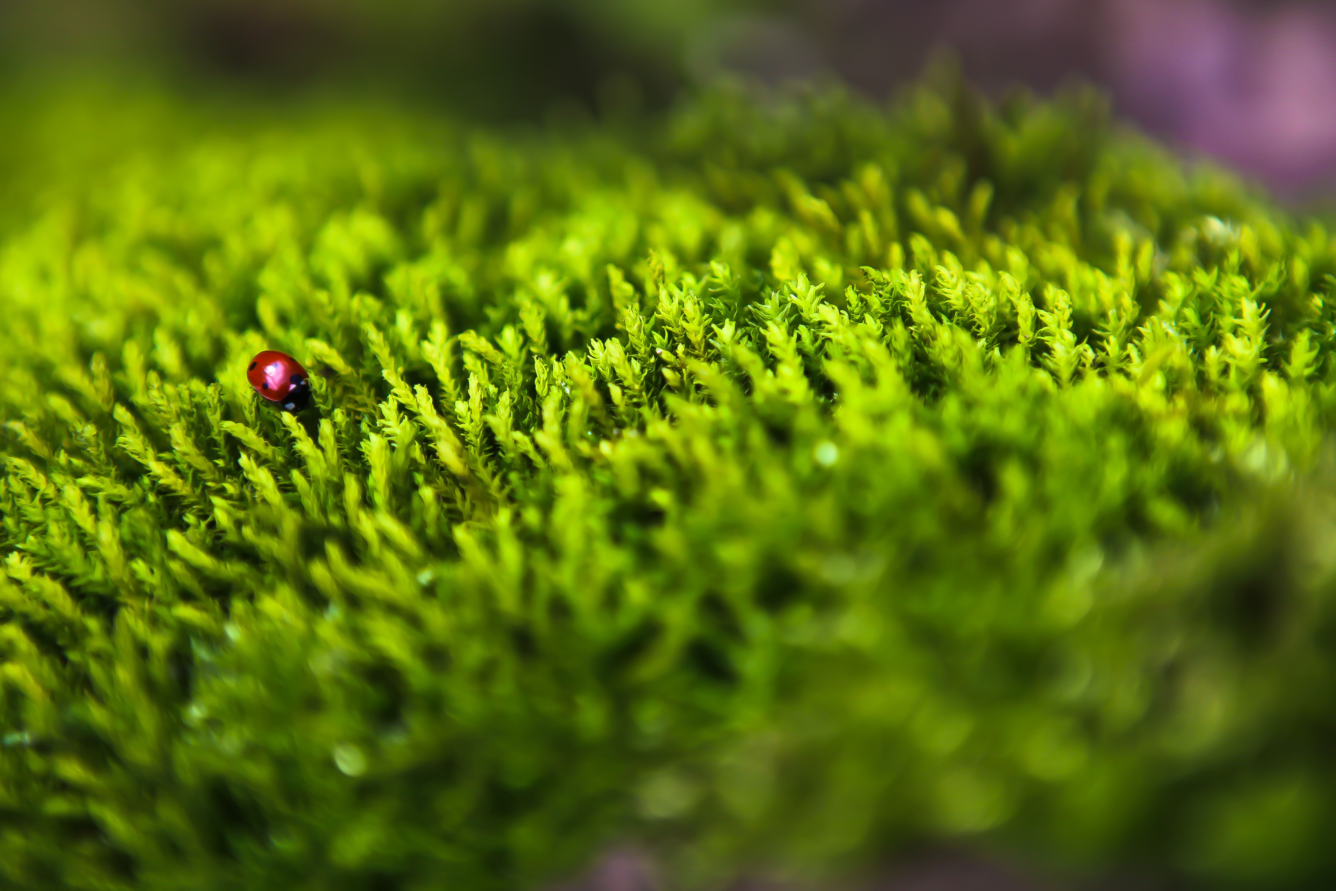 Green forests Animals insects HD Wallpaper