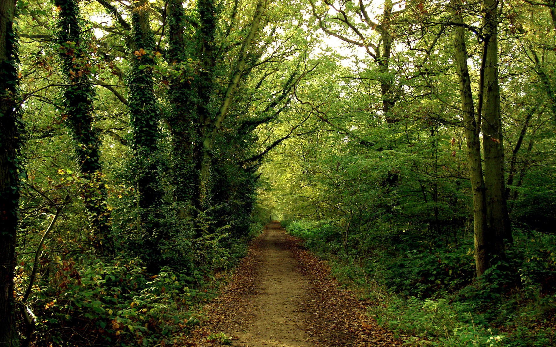 Green forests paths roads HD Wallpaper