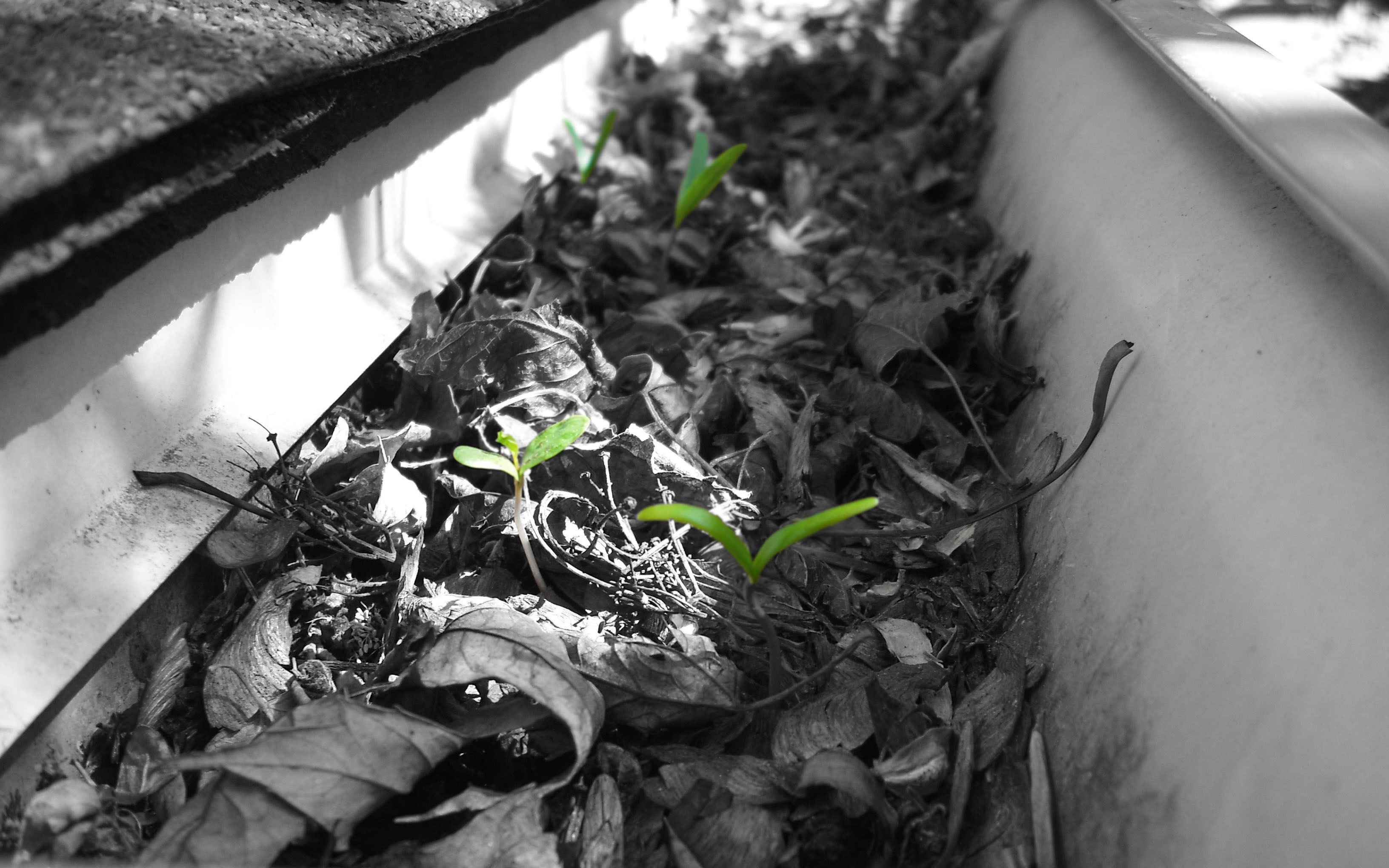 Green leaves Plants selective