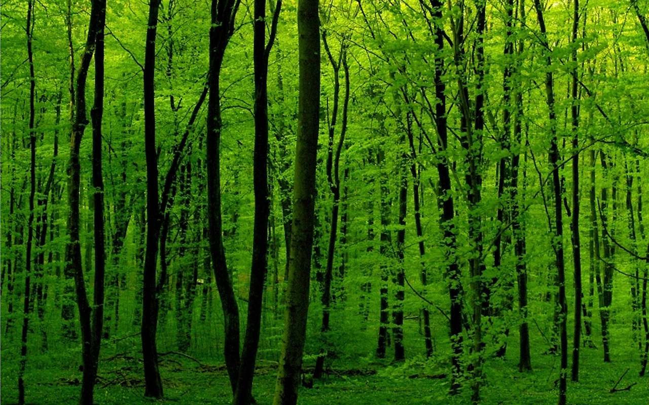 Green nature forests
