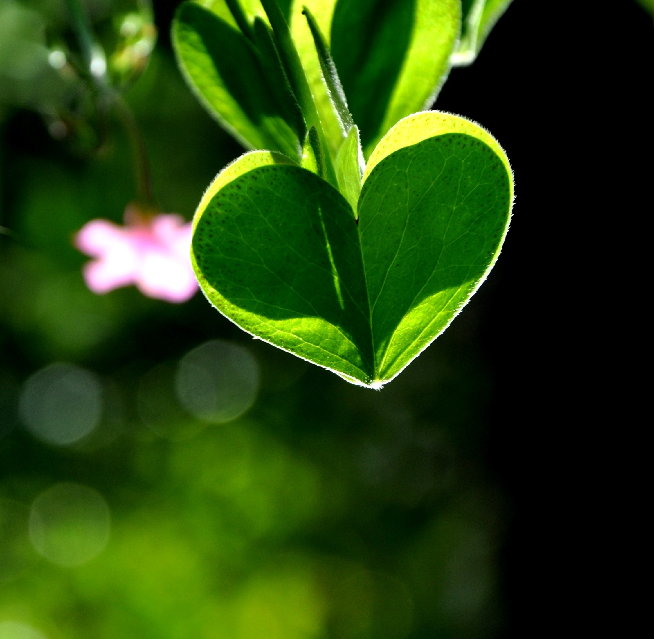 Green nature Hearts HD Wallpaper