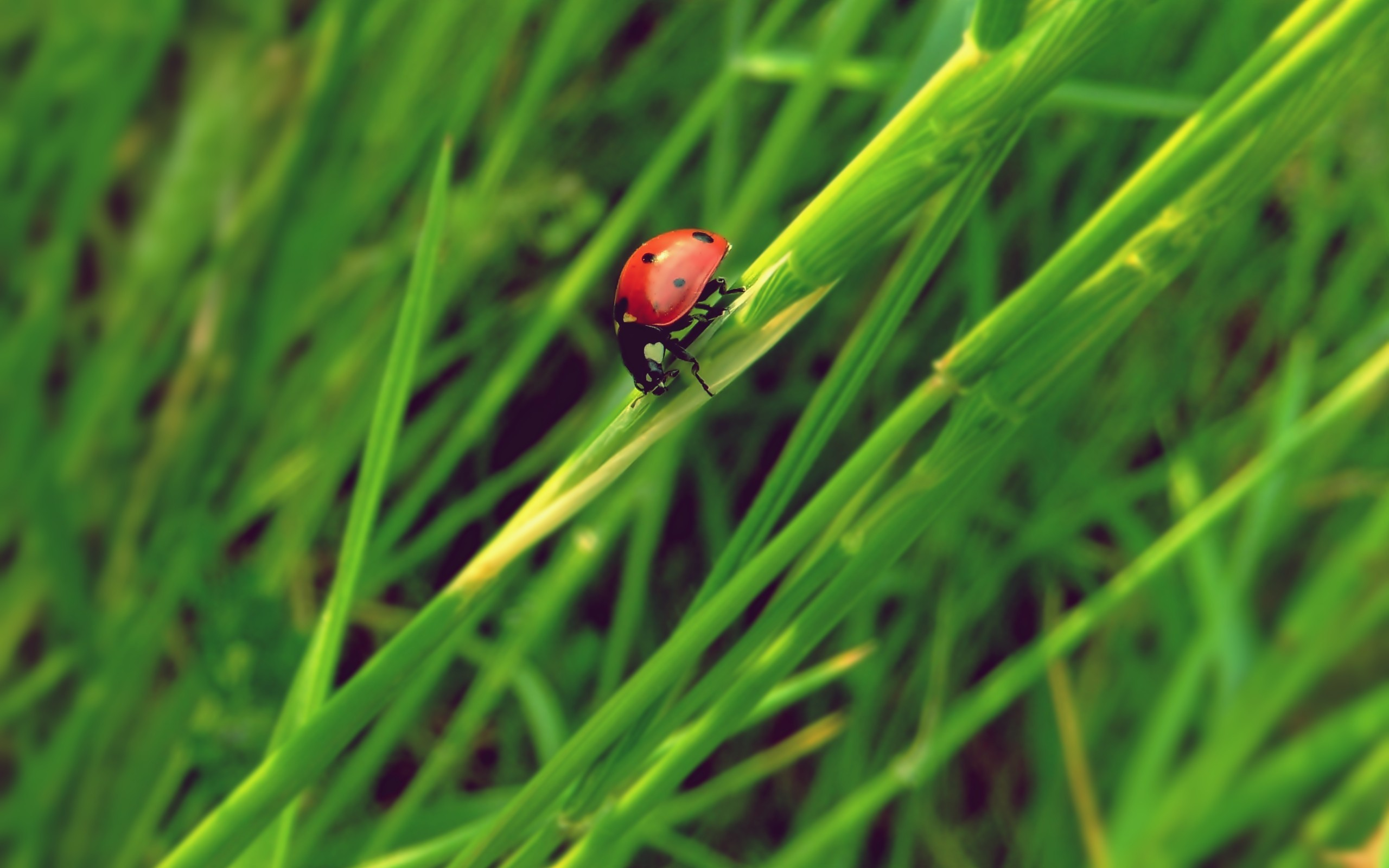Green nature insects grass HD Wallpaper