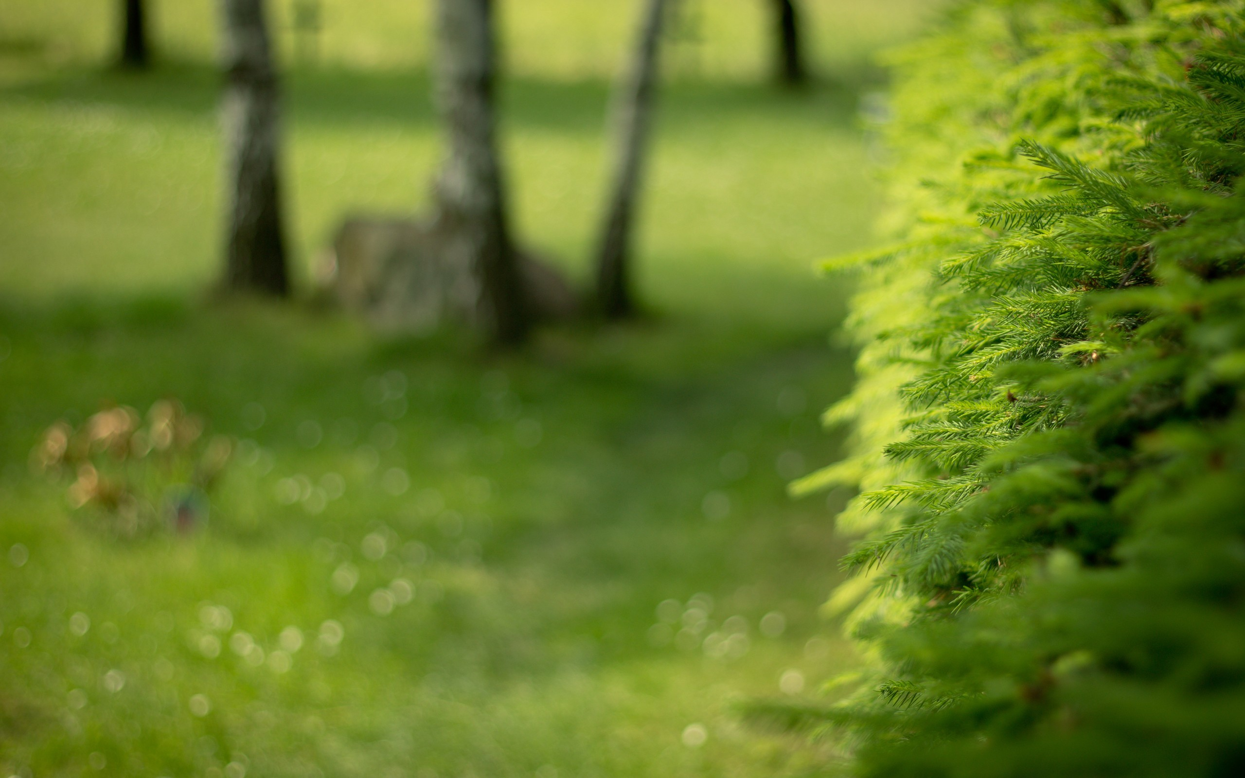 Green nature Trees depth HD Wallpaper