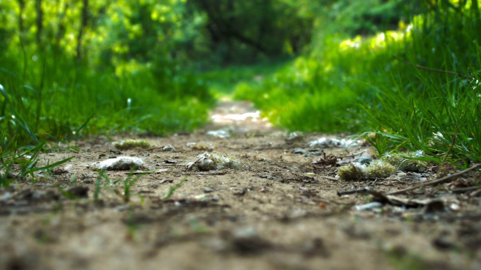 Green paths trail HD Wallpaper