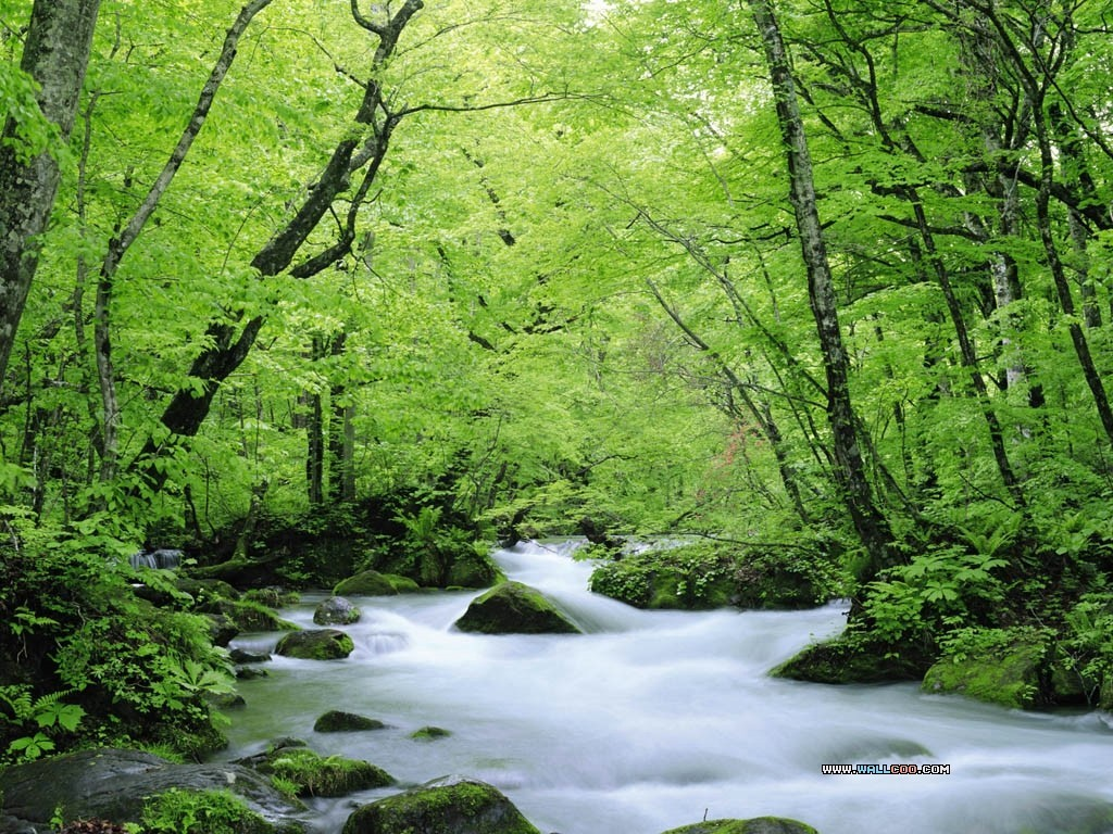 Green water nature forests HD Wallpaper