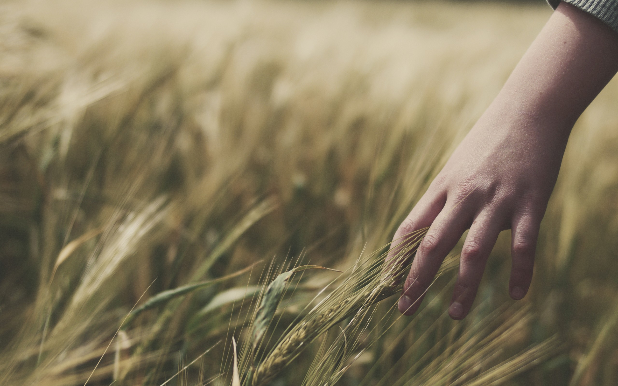 hands spikelets HD Wallpaper