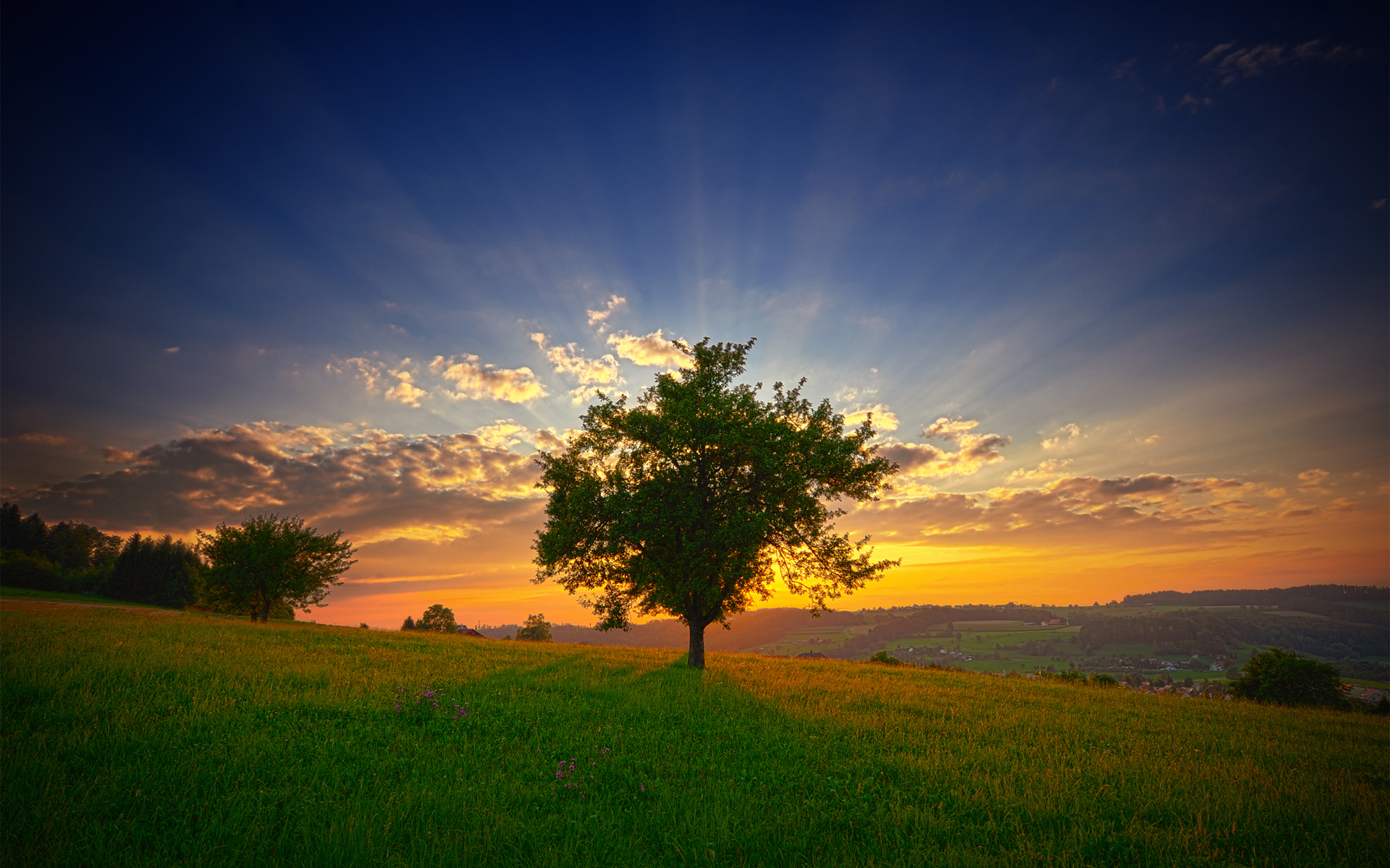 horizon Trees sunlight nature HD Wallpaper