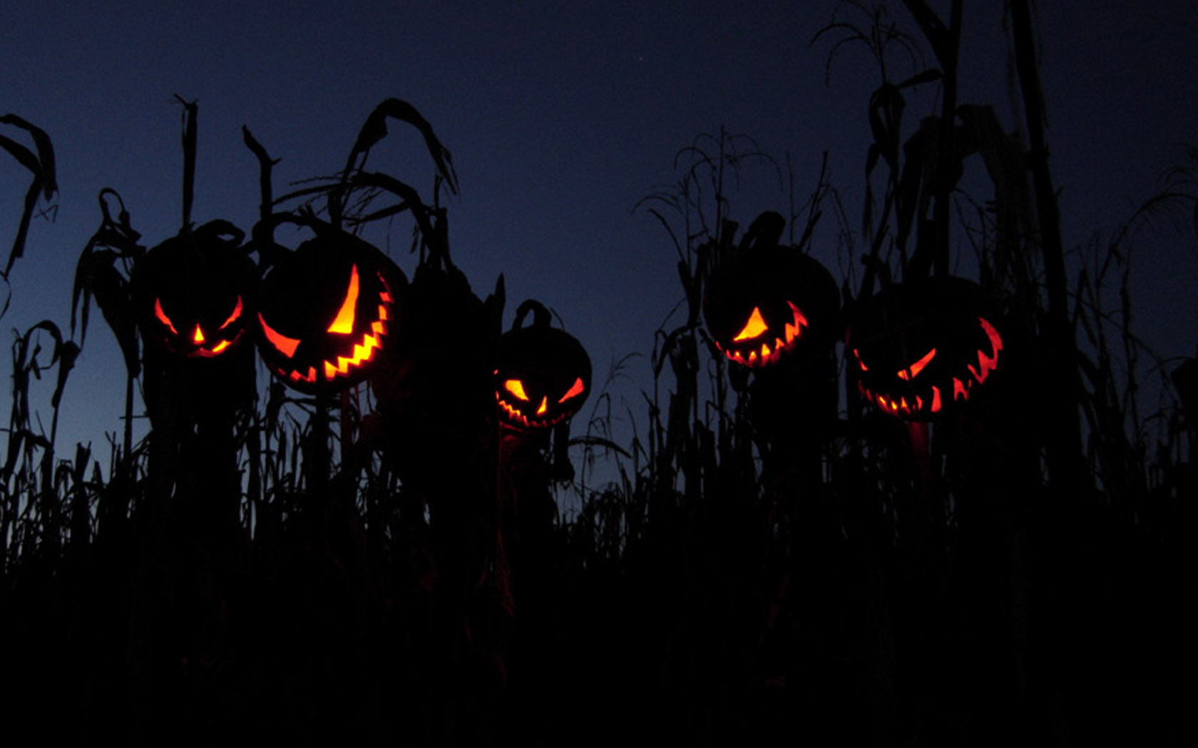 horror Halloween fields pumpkins HD Wallpaper