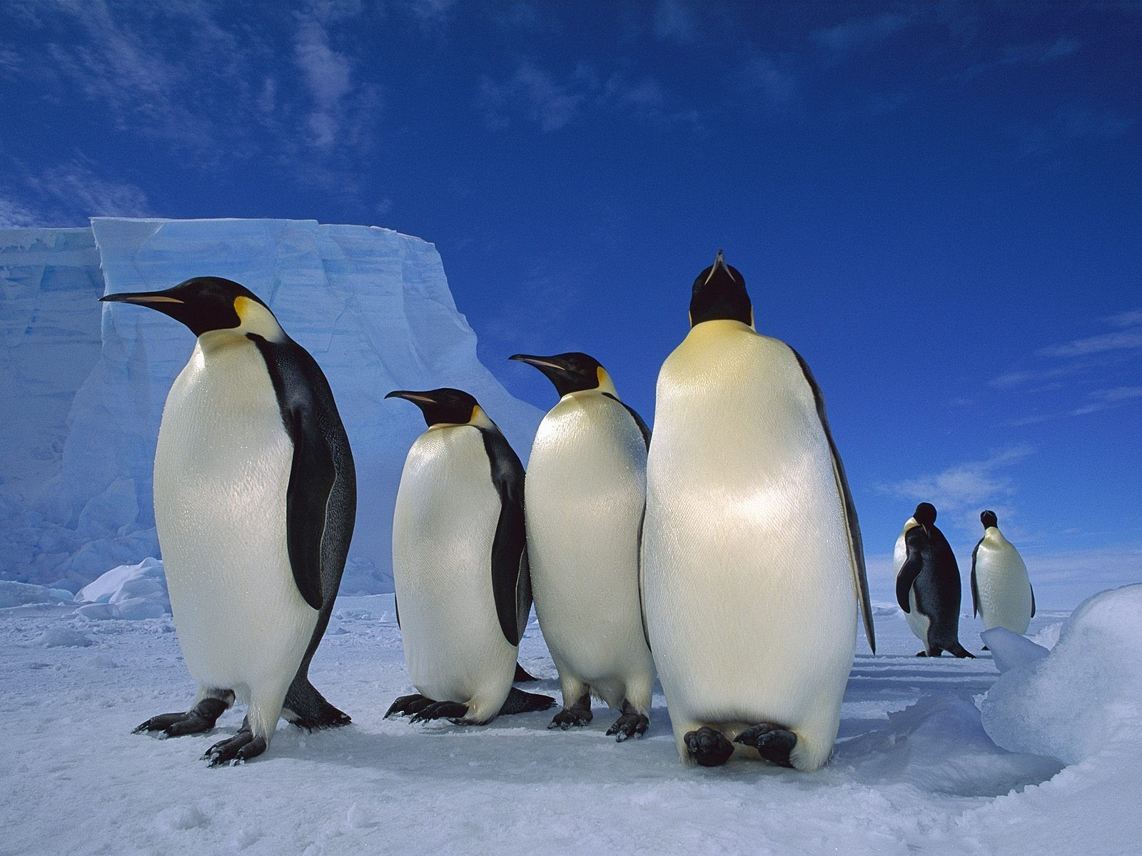 ice snow Penguins Sea HD Wallpaper