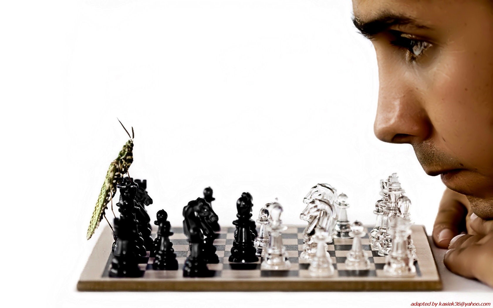 insects chess Men funny HD Wallpaper