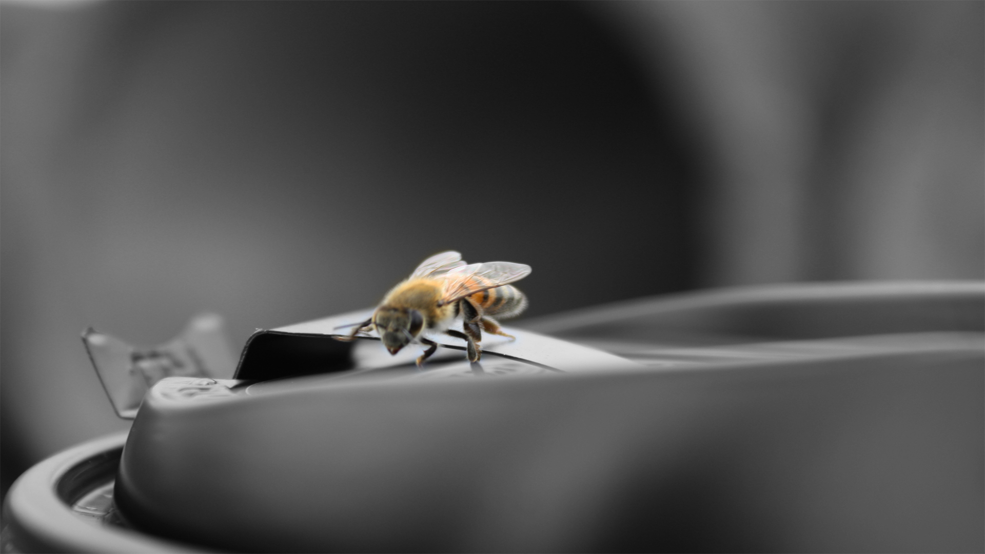 insects coffee macro bees HD Wallpaper