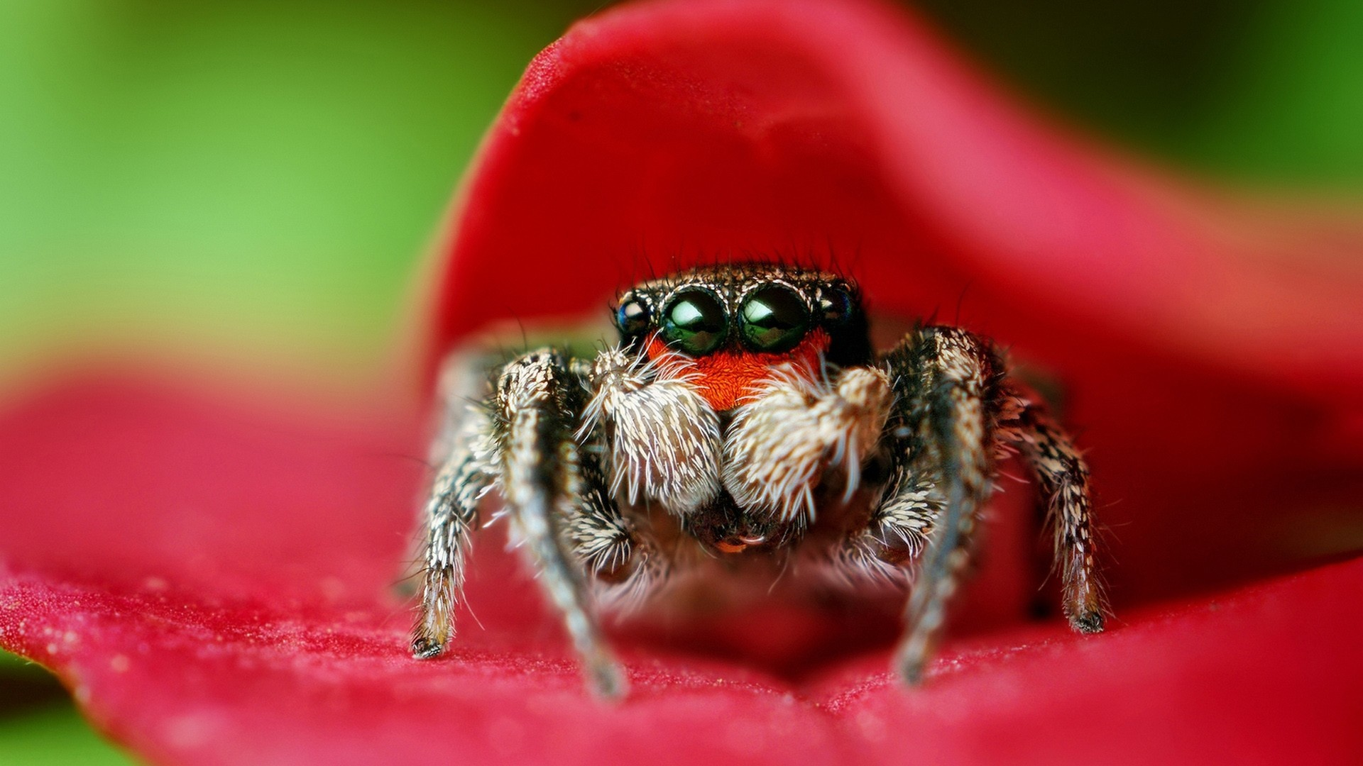 insects spiders arachnids HD Wallpaper