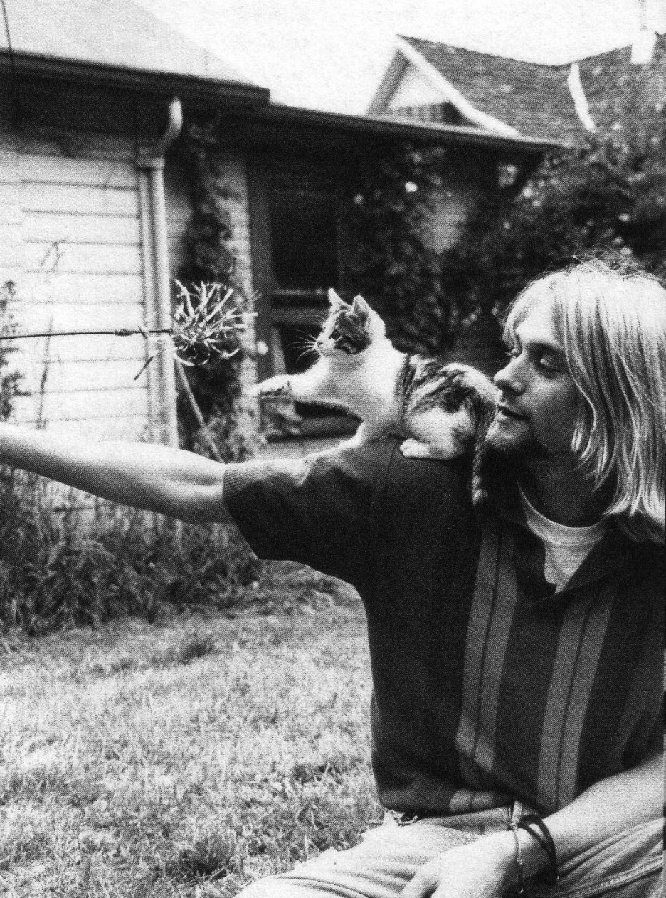 kurt cobain grayscale Kittens HD Wallpaper