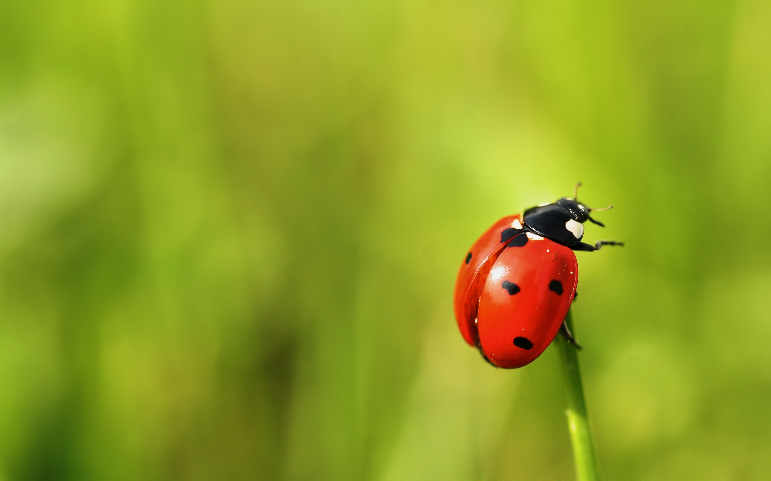 ladybirds nature depth of HD Wallpaper