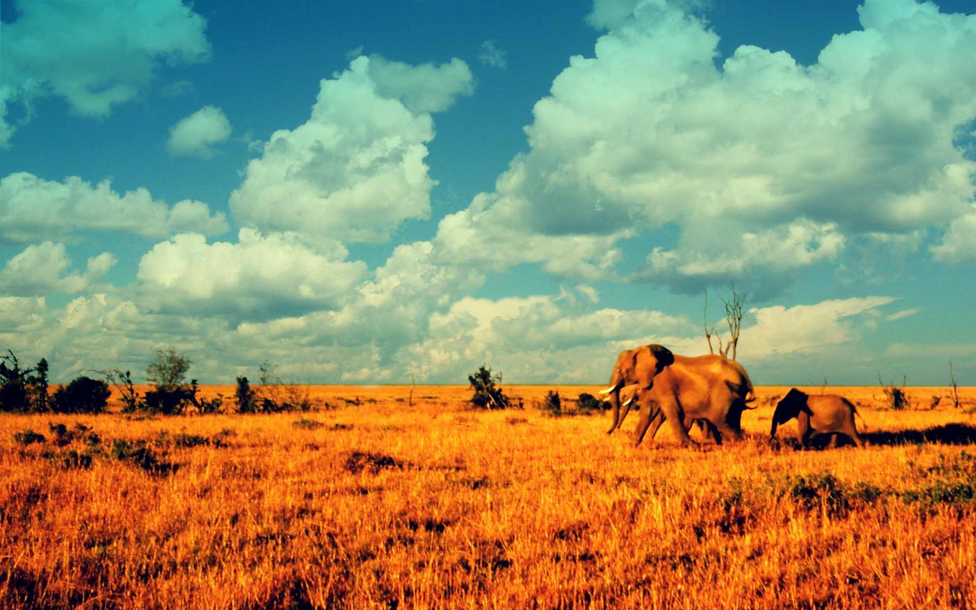 Landscapes Animals elephants baby HD Wallpaper