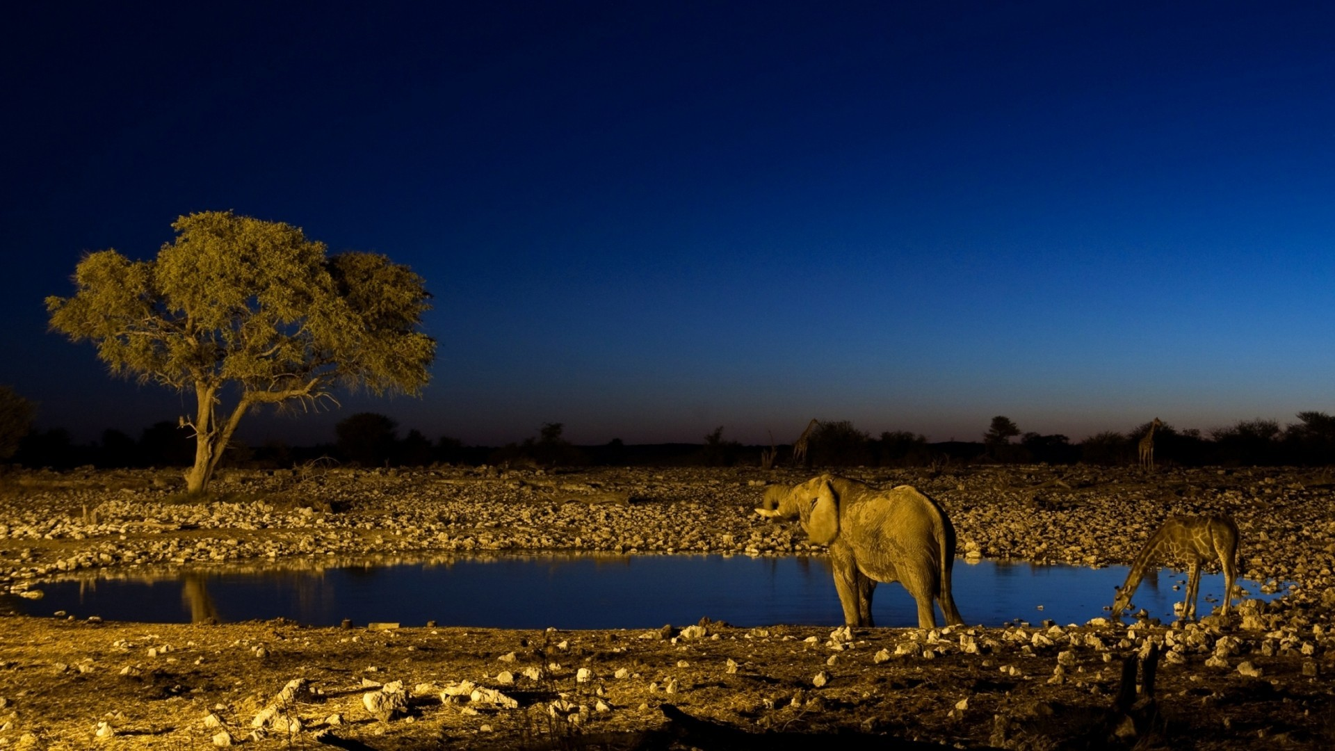 Landscapes Animals ponds elephants HD Wallpaper