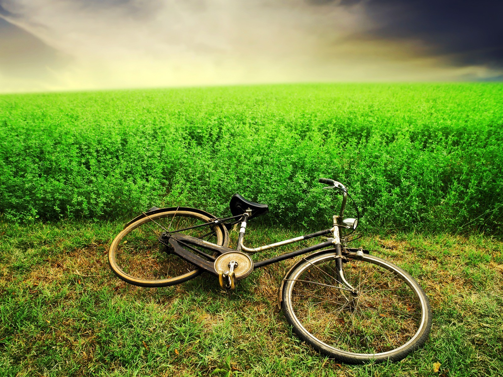Landscapes Bicycles HD Wallpaper