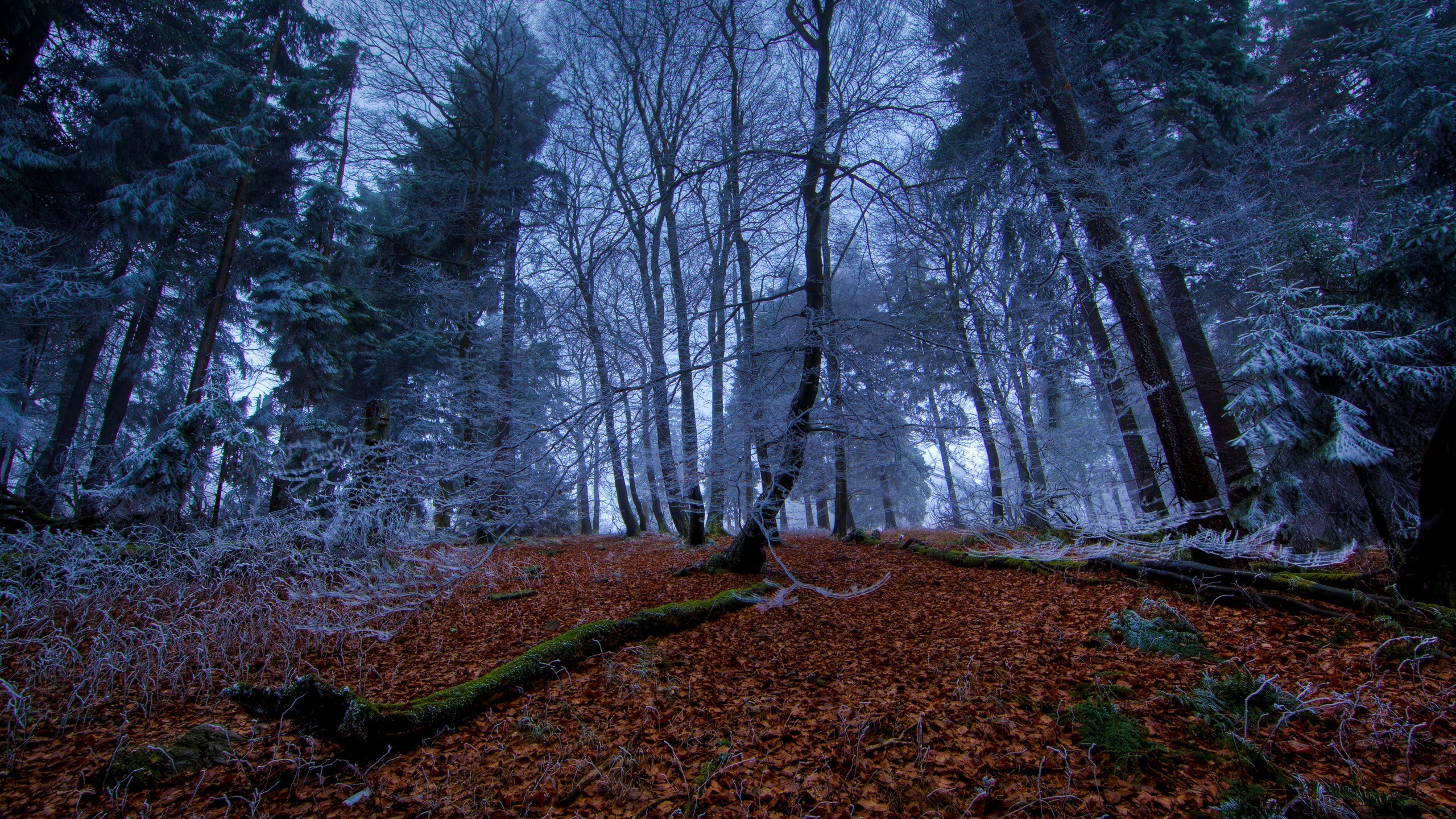 Landscapes forests frost HD Wallpaper