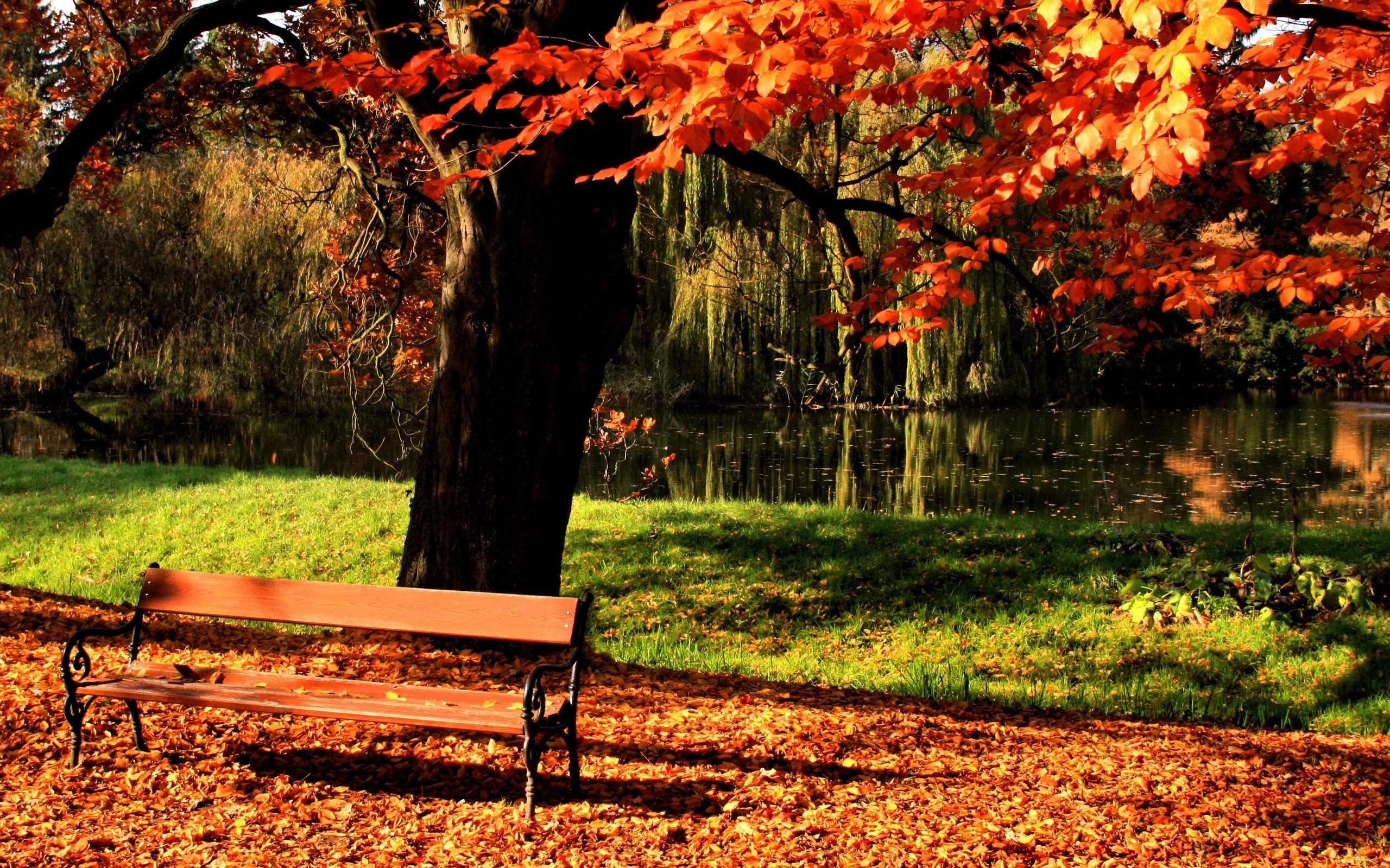 Landscapes nature bench HD Wallpaper