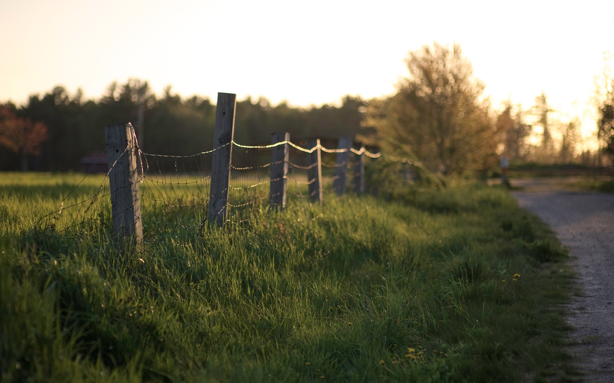 Landscapes nature fences grass HD Wallpaper