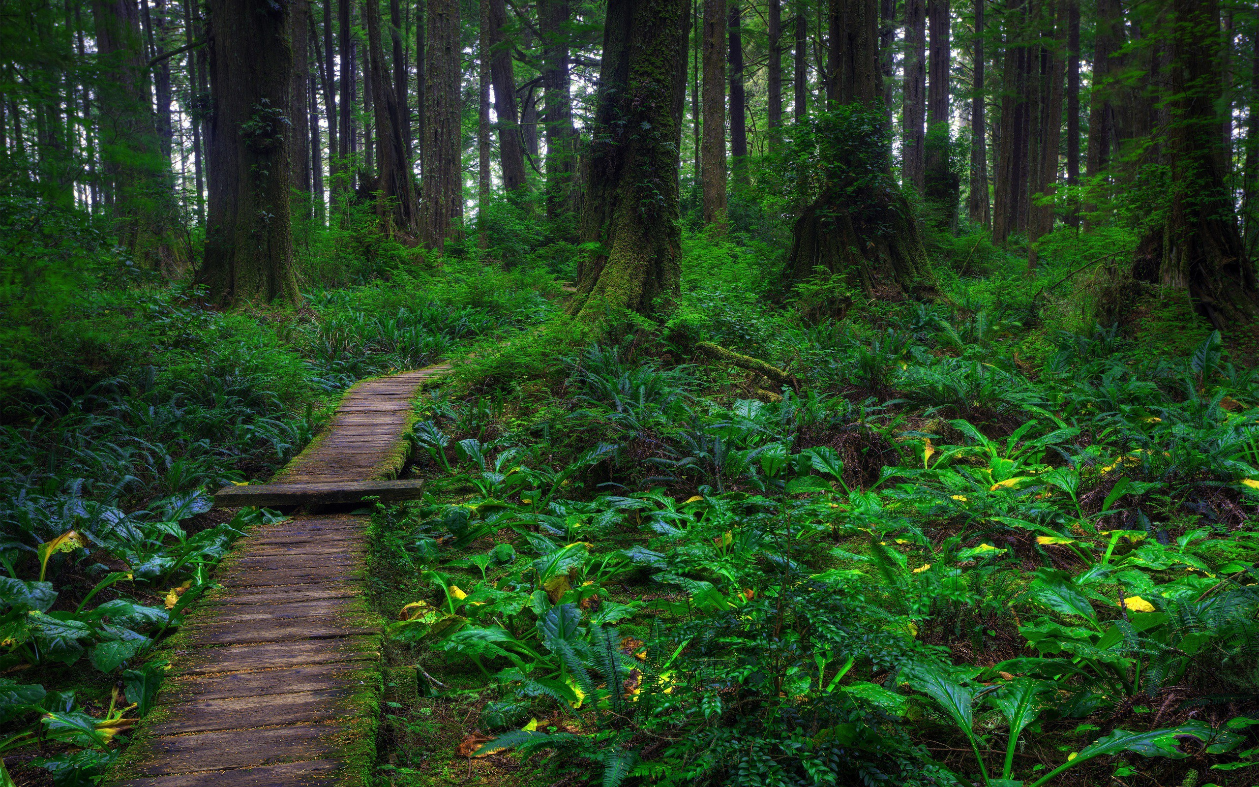 Landscapes nature forests paths HD Wallpaper